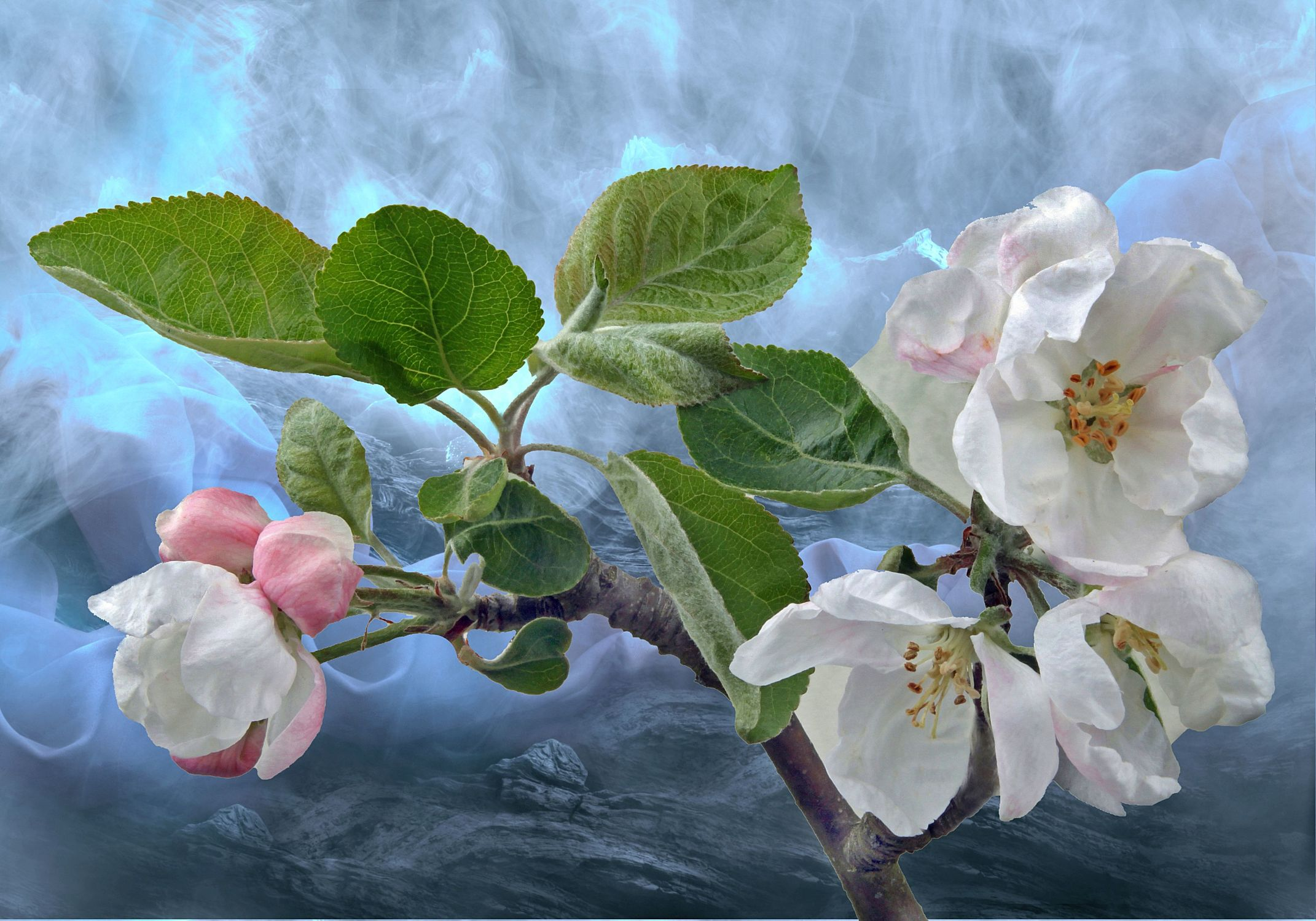 Bild mit Kunst, Pflanzen, Himmel, Wolken, Blumen, Blumen, Pflanze, Stilleben, Apfelblüte, Zweig, apfelblüten, blütenblüten
