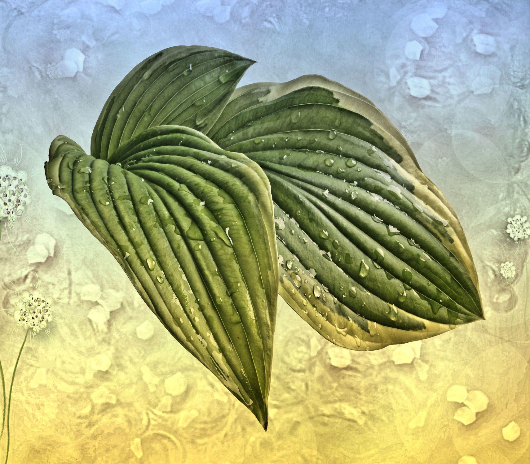 Bild mit Natur, Wasser, Pflanzen, Blätter, Pflanze, Blatt, Wassertropfen, Stilleben, Wellness, texture