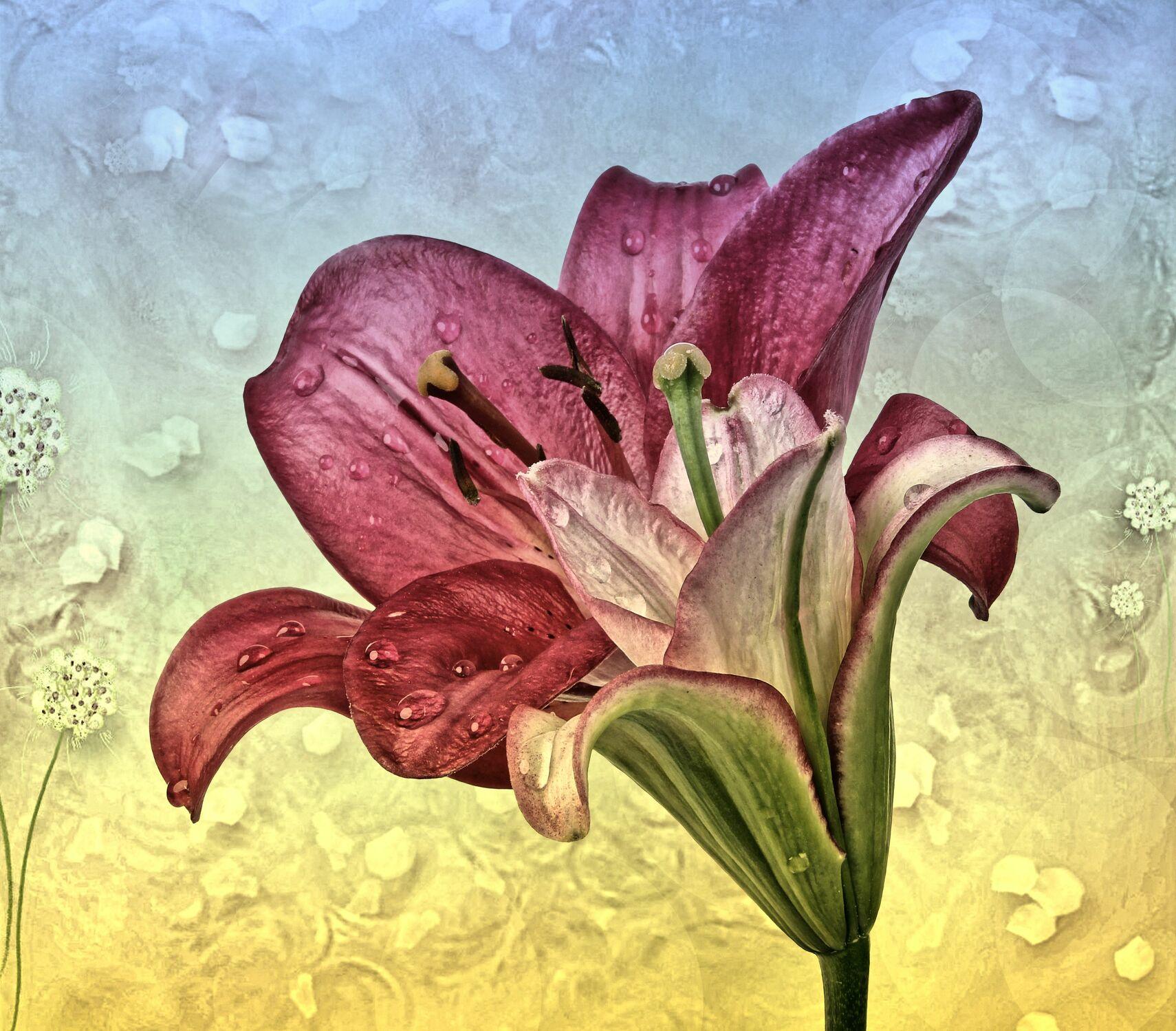Bild mit Pflanzen, Blumen, Blume, Pflanze, Lilie, Lilien, Floral, Blüten, Florales, Textur, blüte