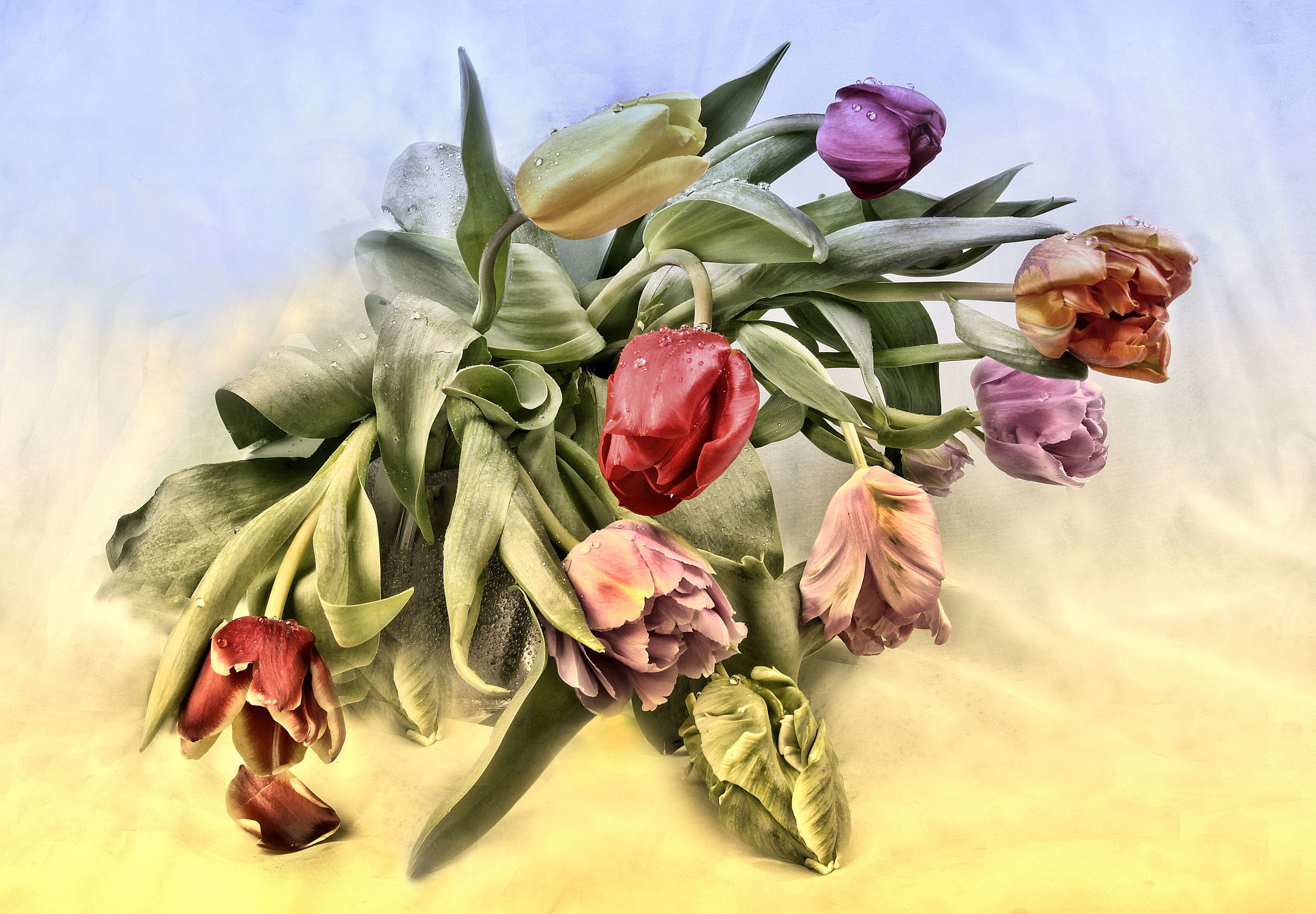 Bild mit Pflanzen, Blätter, Tulpe, Tulpen, Blatt, Wassertropfen, Floral, Stilleben, Blüten, Florales, dekorativ
