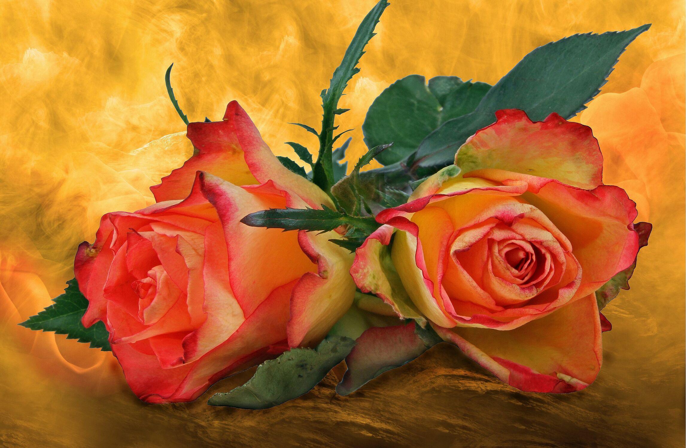 Bild mit Blumen, Rosen, Blätter, Blume, Rose, Blatt, Floral, Stilleben, Blüten, Florales, blüte