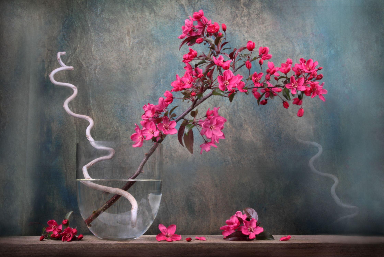 Bild mit Kunst, Natur, Pflanzen, Blumen, Blume, Pflanze, Fauna, Floral, Flora, Blüten, Florales, blüte, Deko