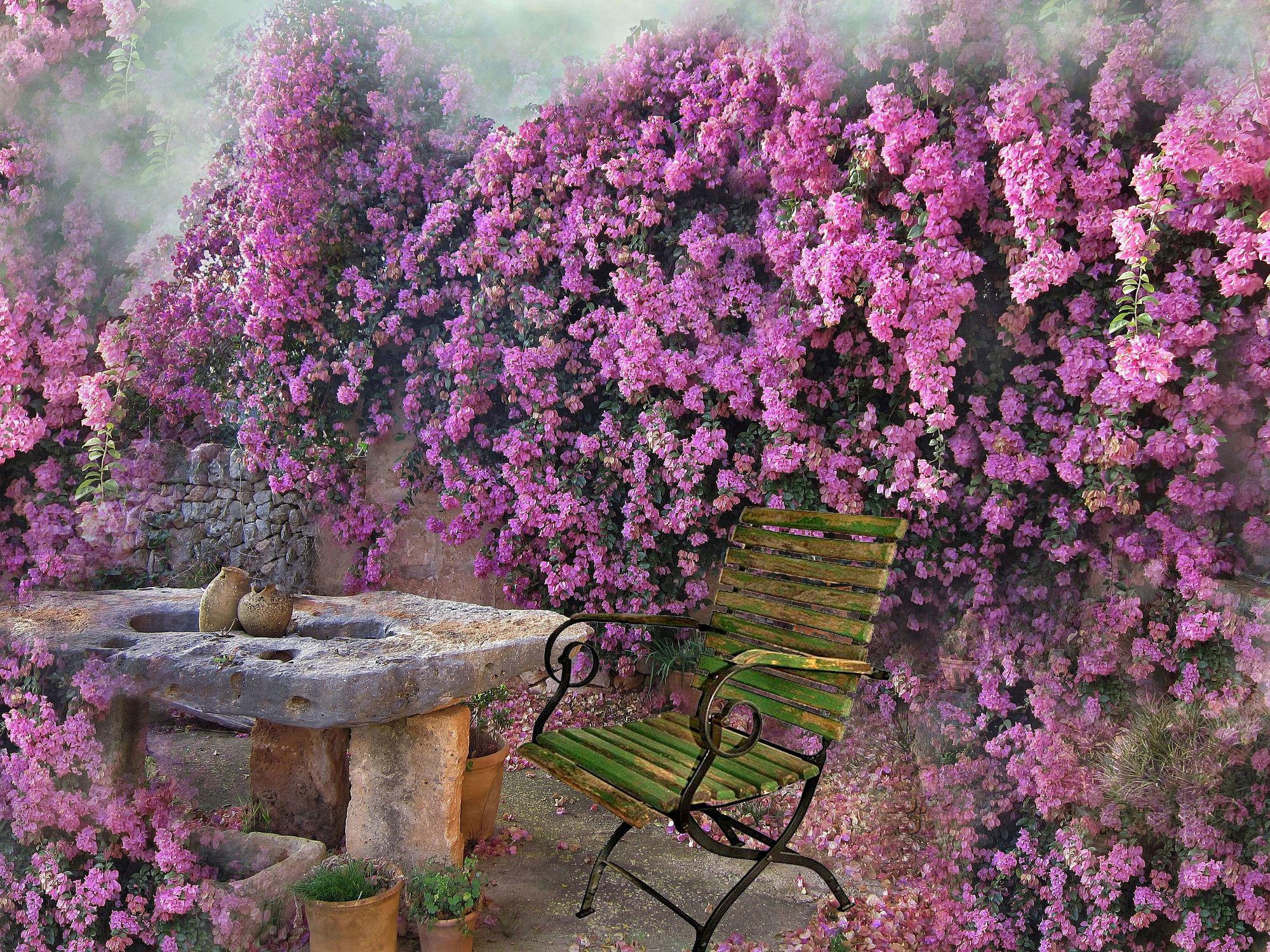 Bild mit Blumen, Blume, Pflanze, Pflanze, romantik, Floral, Stilleben, Blüten, Florales, blüte, romantisch