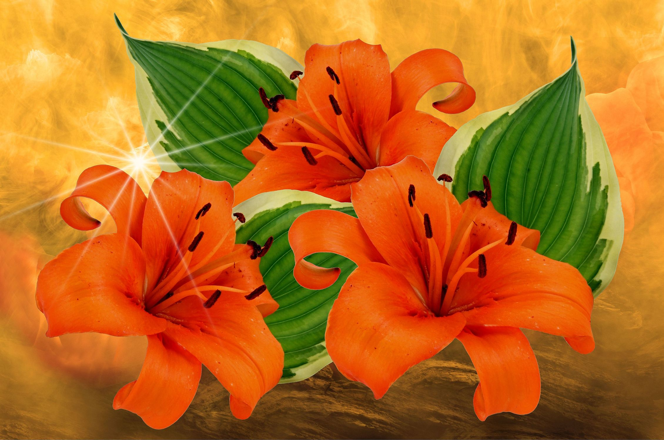 Bild mit Orange, Pflanzen, Himmel, Wolken, Blumen, Nebel, Blätter, Blume, Pflanze, Blatt, Lilie, Lilien, Floral, Stilleben, Blüten, Florales, Sterne, romantisch, stern