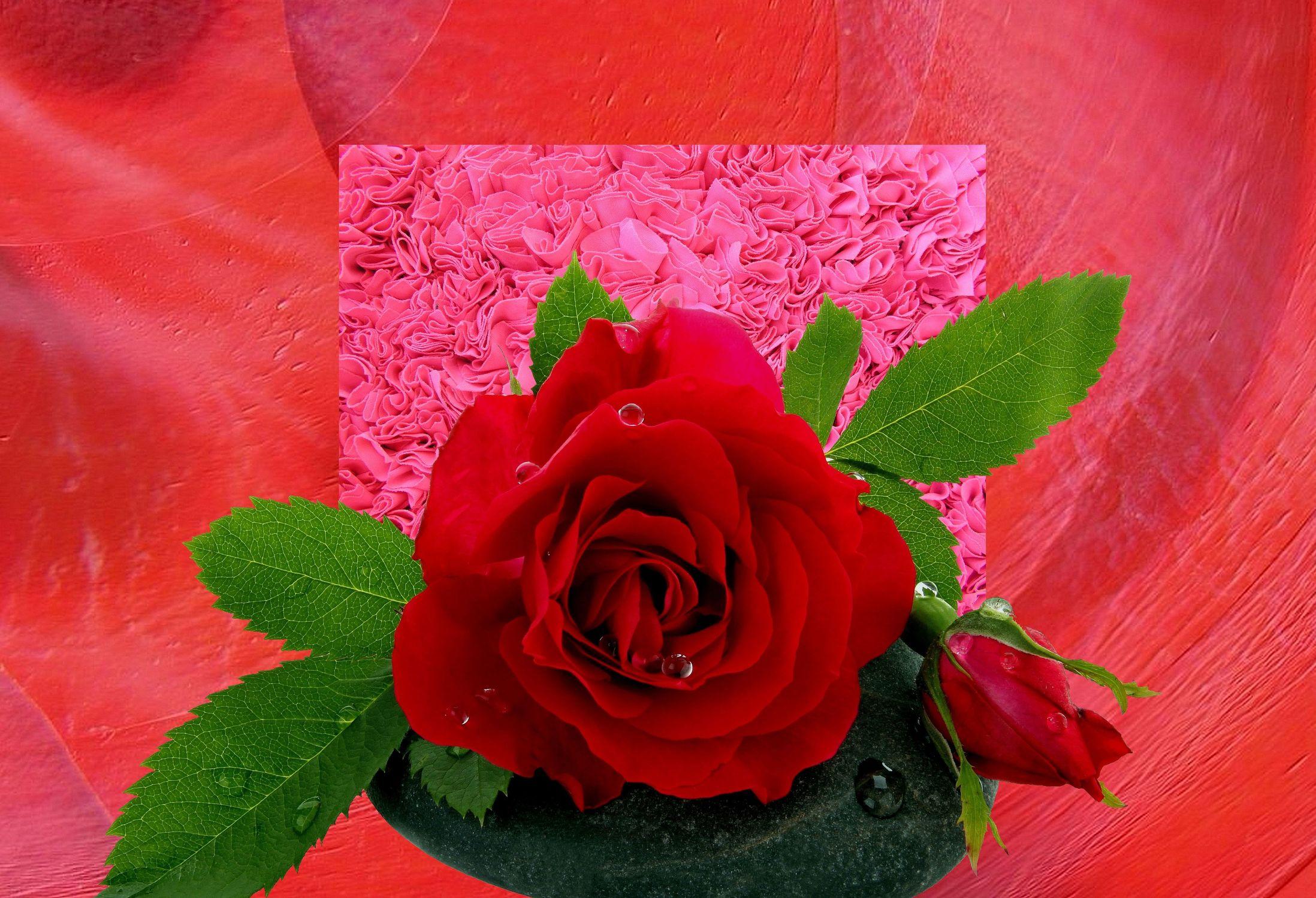 Bild mit Wasser, Pflanzen, Rosen, Blätter, Pflanze, Rose, Blatt, Wassertropfen, Floral, Stilleben, Blüten, Florales, Wellness, blüte, Dekoration