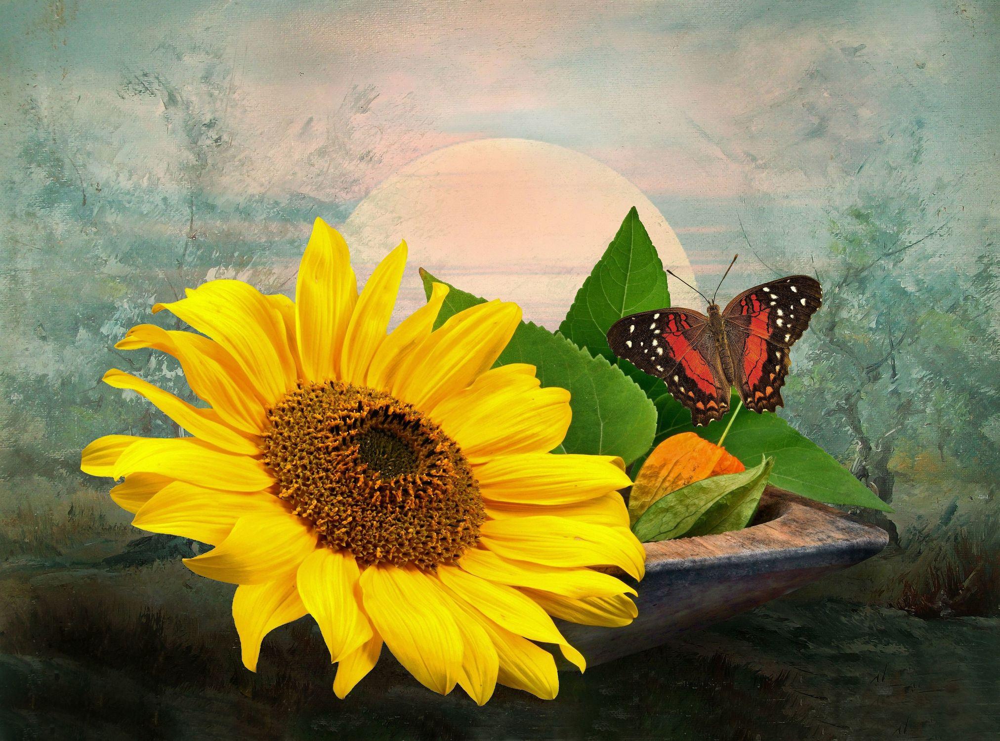 Bild mit Pflanzen, Himmel, Bäume, Blumen, Sonnenblumen, Sonne, Blätter, Landschaft, Blume, Pflanze, Sonnenblume, Blatt, Floral, Toskana, Stilleben, Blüten, Florales, blüte
