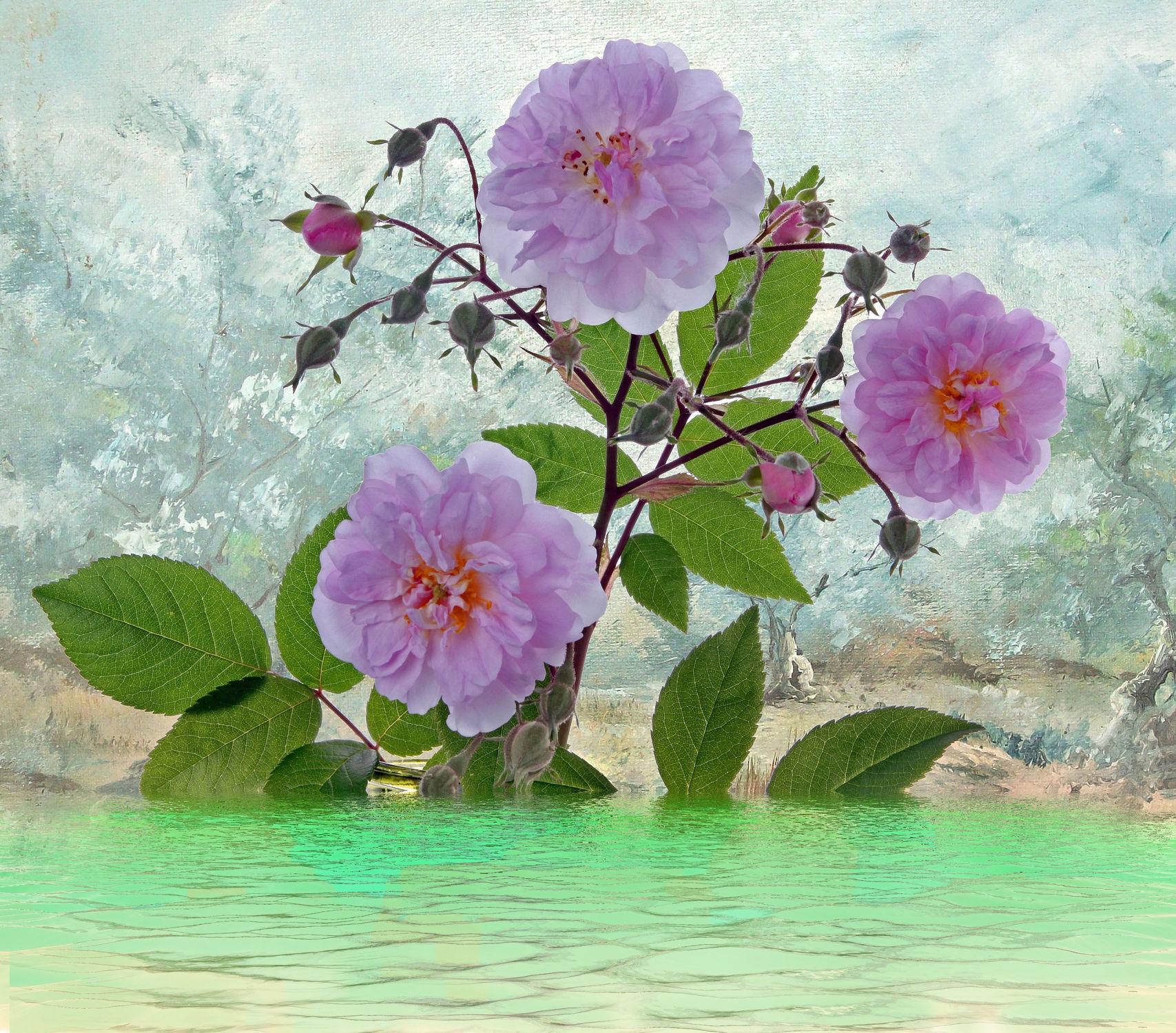 Bild mit Wasser, Pflanzen, Himmel, Wolken, Blumen, Landschaft, Blume, Pflanze, See, Spiegelung, Stilleben, Blüten, blüte, Fluss, Ufer