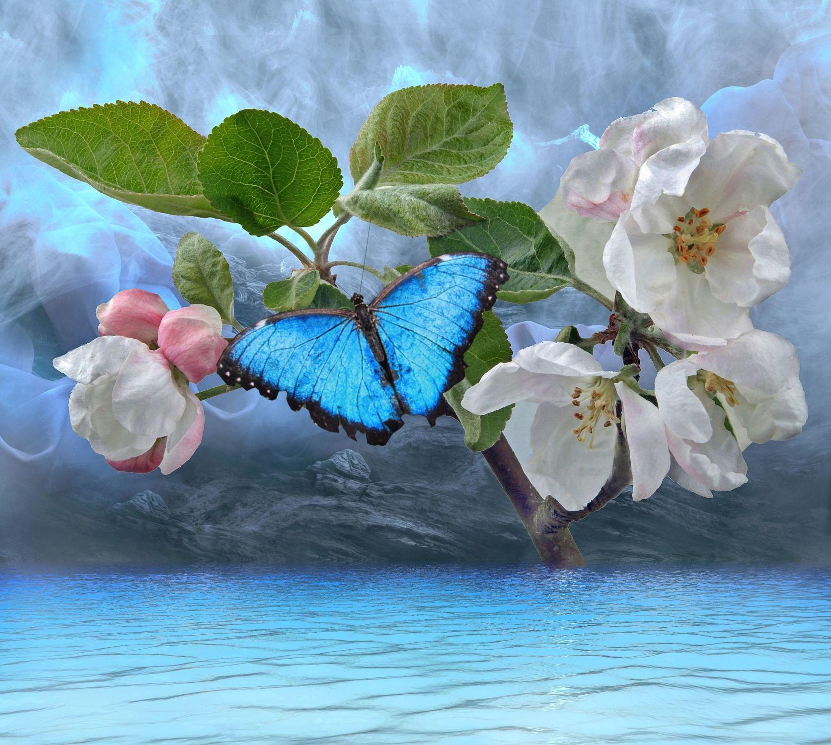 Bild mit Wasser, Pflanzen, Himmel, Wolken, Blumen, Baum, Blume, Pflanze, See, Stilleben, Blüten, Schmetterling, blüte, Apfelblüte, Fluss, Wasserspiegelung