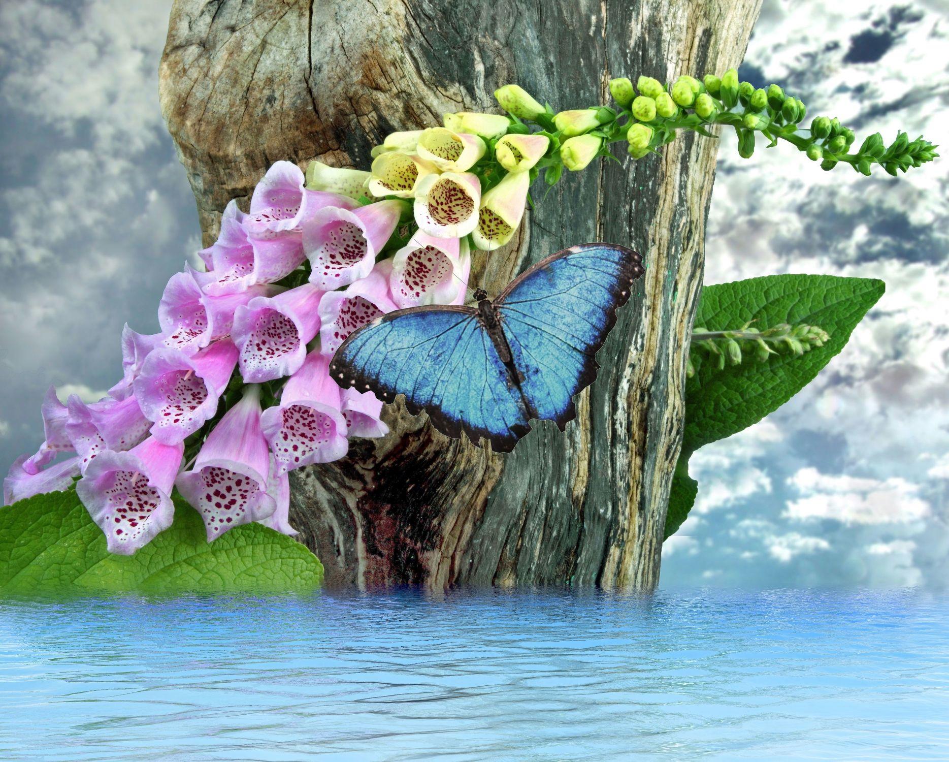 Bild mit Wasser, Pflanzen, Himmel, Wolken, Gewässer, Blumen, Baum, Blätter, Blume, Pflanze, Blatt, See, Bach, Floral, Stilleben, Florales, Schmetterling, fingerhüte, fingerhut