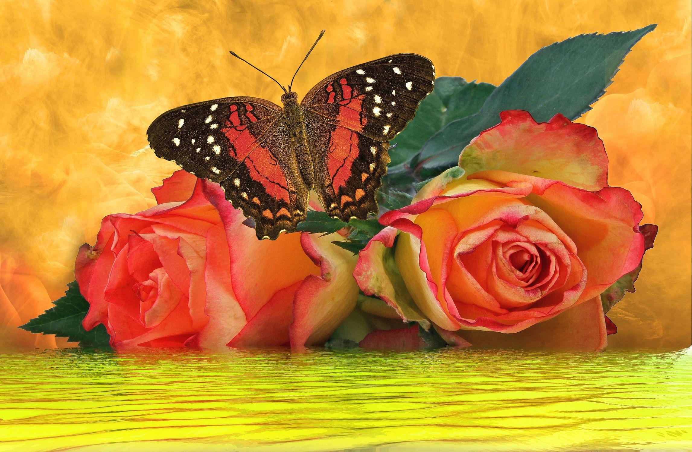 Bild mit Wasser, Pflanzen, Himmel, Wolken, Gewässer, Rosen, Schmetterlinge, Pflanze, Rose, Stilleben, Blüten, Schmetterling, blüte, Fluss