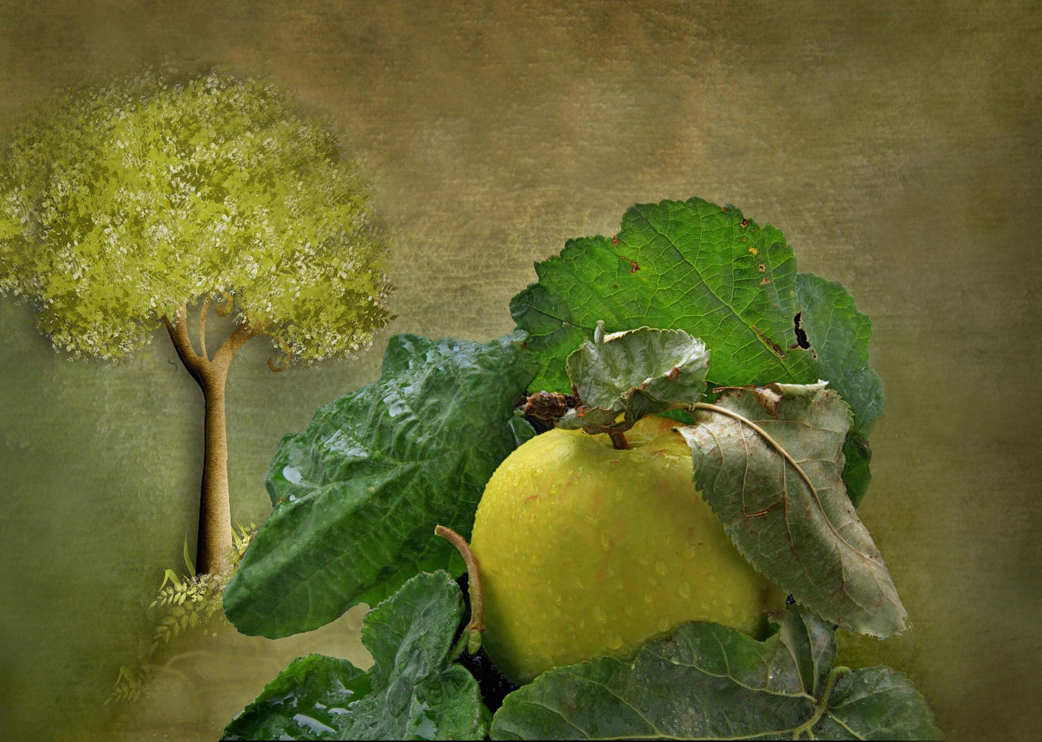 Bild mit Früchte, Essen, Baum, Blätter, Obst, Wassertropfen, Apfel, Apfel