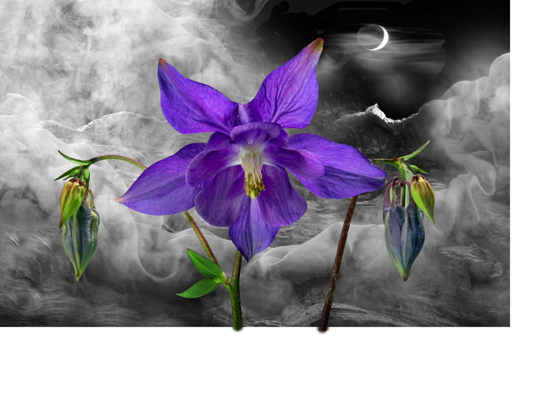 Bild mit Pflanzen, Himmel, Wolken, Blumen, Sonne, Blume, Pflanze, Floral, Blüten, Florales, blüte, Gebirge, Akelei