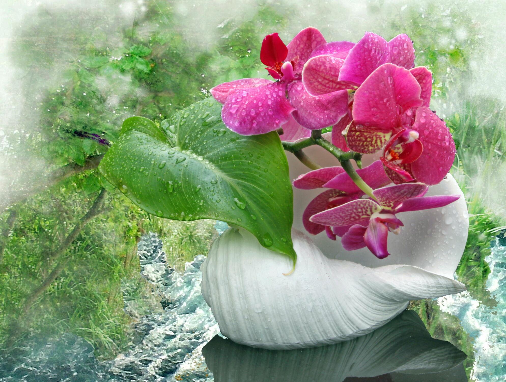 Bild mit Orchideen, Blume, Orchidee, Pflanze, Muschel, Floral, Florales, garten, blüte