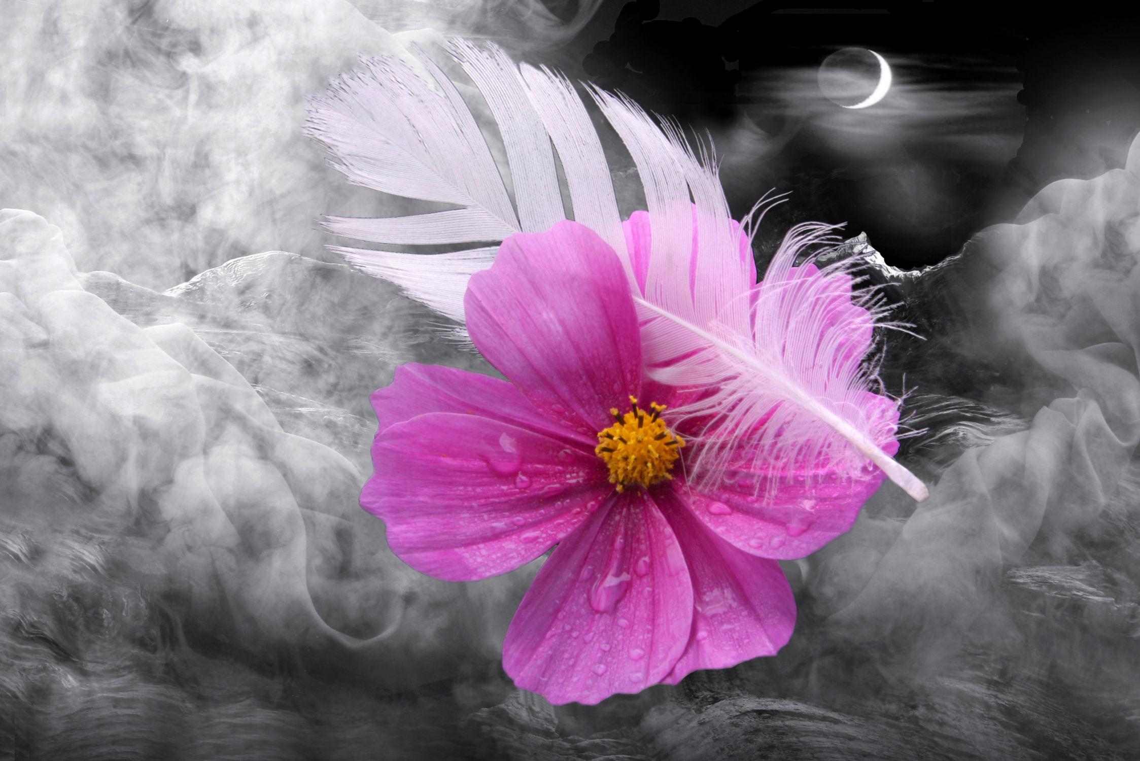 Bild mit Himmel, Wolken, Blumen, Sonne, Blume, Floral, cosmea, Blüten, blüte, pink, romantisch, Feder