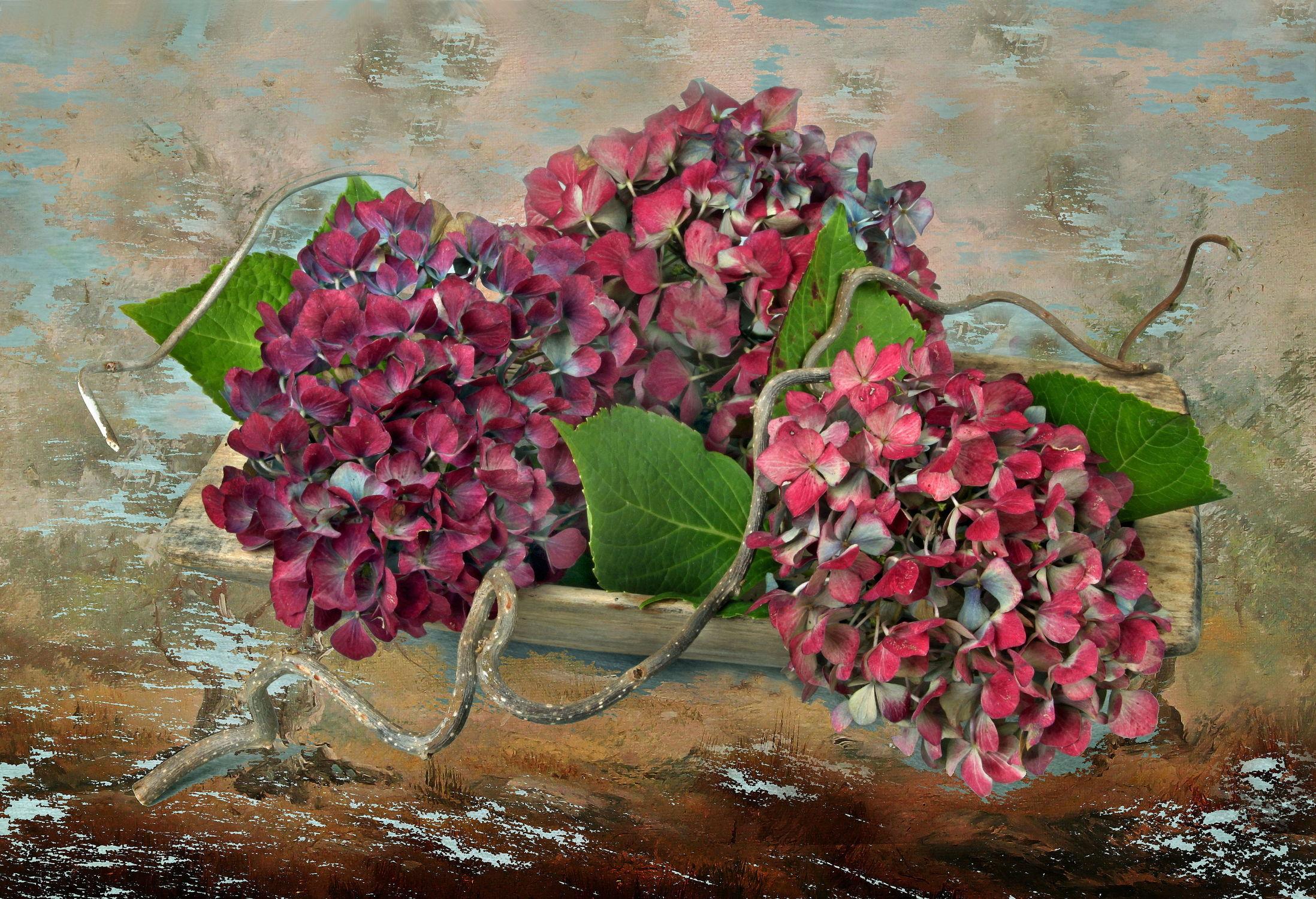 Bild mit Blumen, Blume, Pflanze, Floral, Toskana, hortensien, Blüten, Florales, Textur, blüte, Hortensie