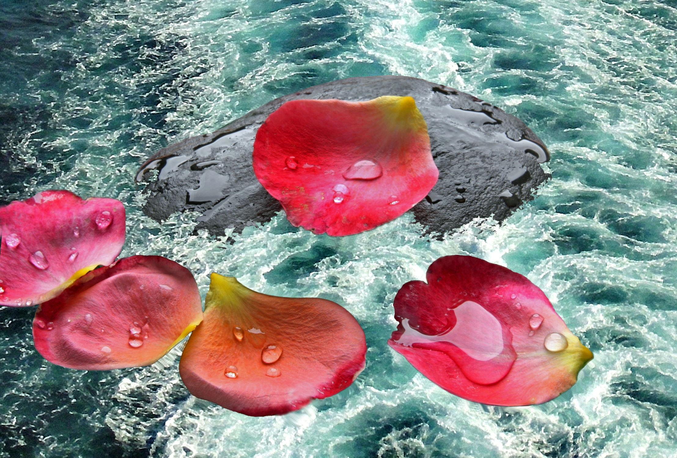 Bild mit Wasser, Gewässer, Blumen, Stein, Meer, Steine, Blume, Rose, See, Floral, Florales, Rosenblätter, rosenblatt