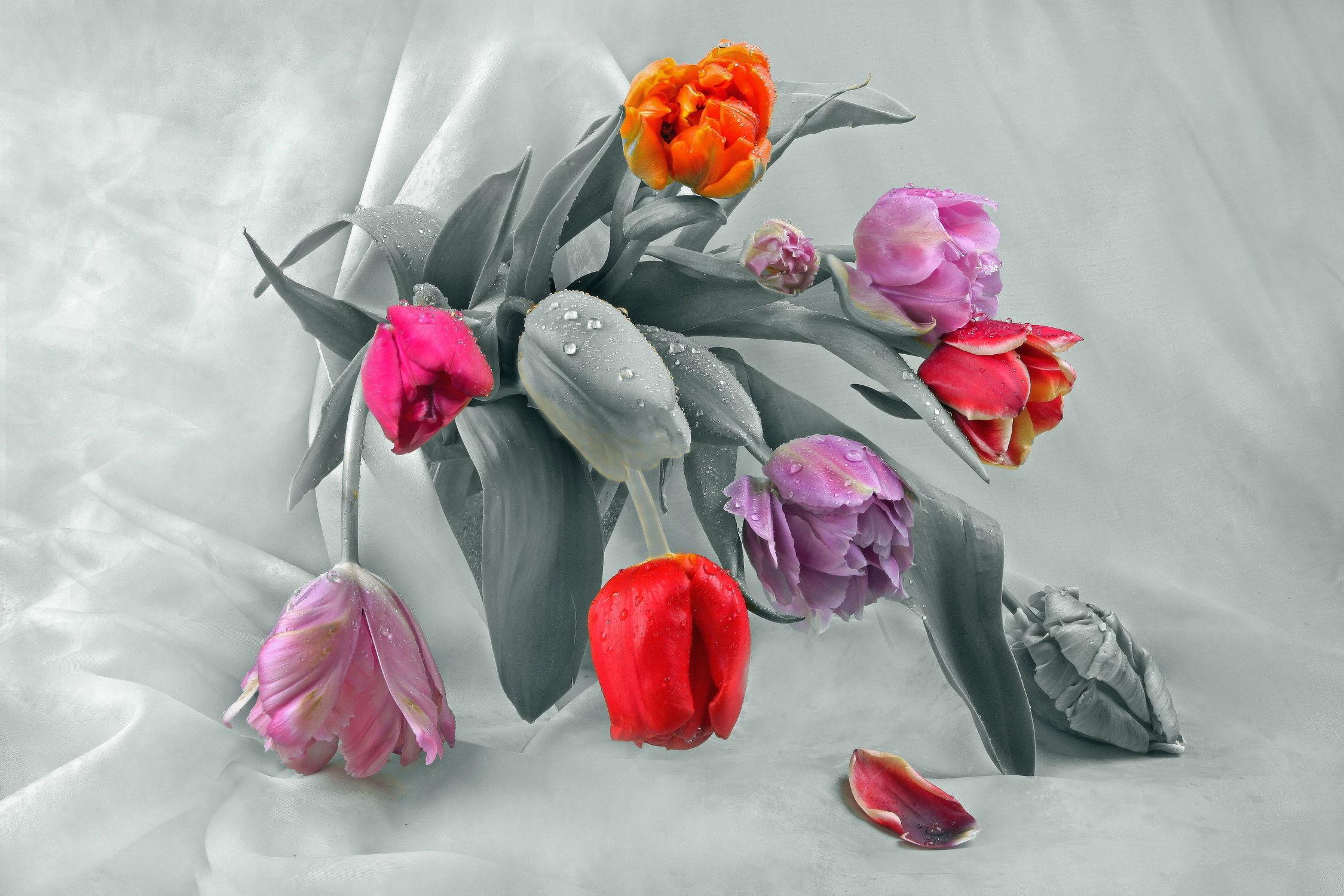 Bild mit Pflanzen, Blumen, Blume, Tulpe, Tulpen, Floral, Flora, Stilleben, Blüten, Florales, blüte