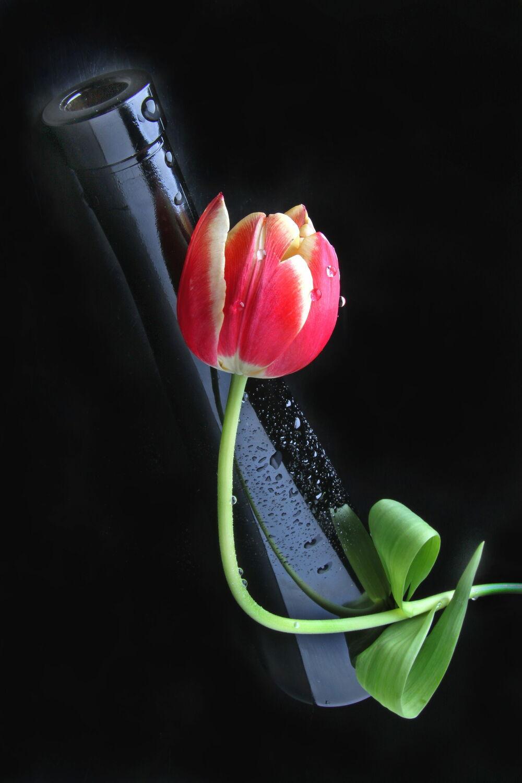 Bild mit Blumen, Blume, Pflanze, Tulpe, Tulpen, Flasche, Floral, Blüten, Florales, blüte