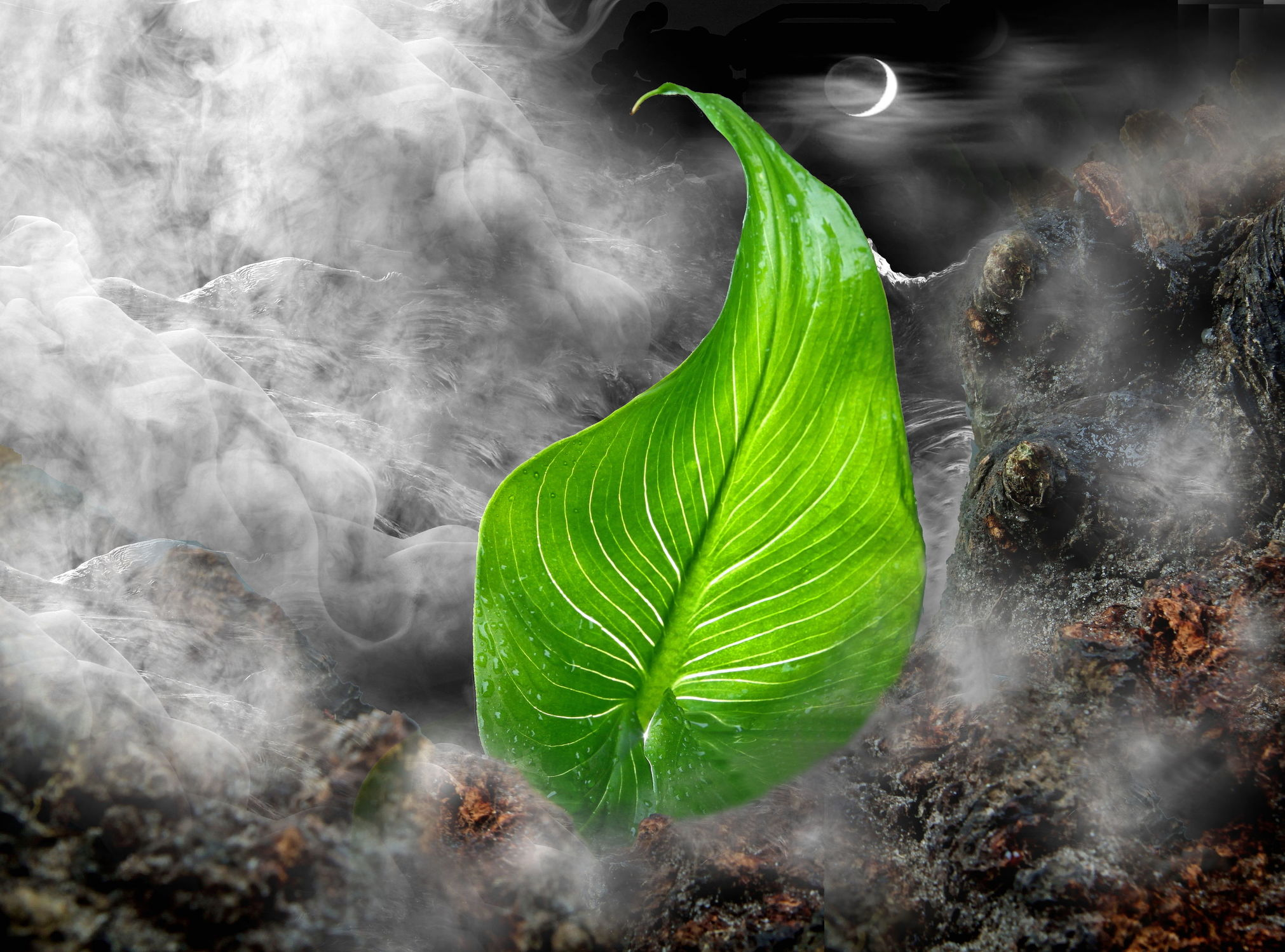 Bild mit Natur, Pflanzen, Himmel, Wolken, Nebel, Blätter, Pflanze, Blatt, Fauna, Gebirge