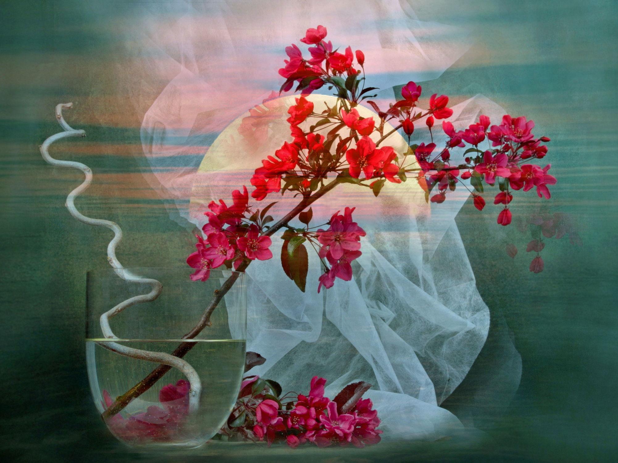 Bild mit Himmel, Wolken, Blumen, Sonne, Blume, Floral, Blüten, Florales, blüte, romantisch, Hochzeit, vase