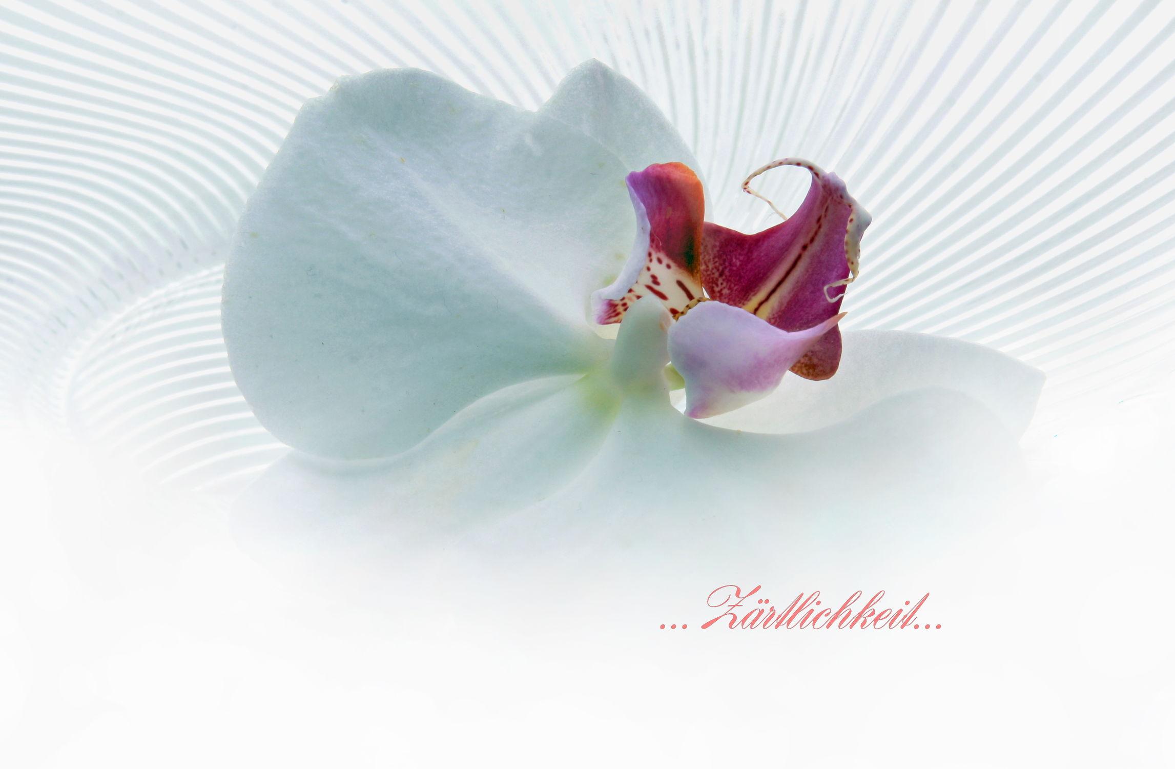 Bild mit Blumen, Orchideen, Blume, Orchidee, Floral, Blüten, Florales, blüte, romantisch, Liebe, Zärtlichkeit, paare, soft