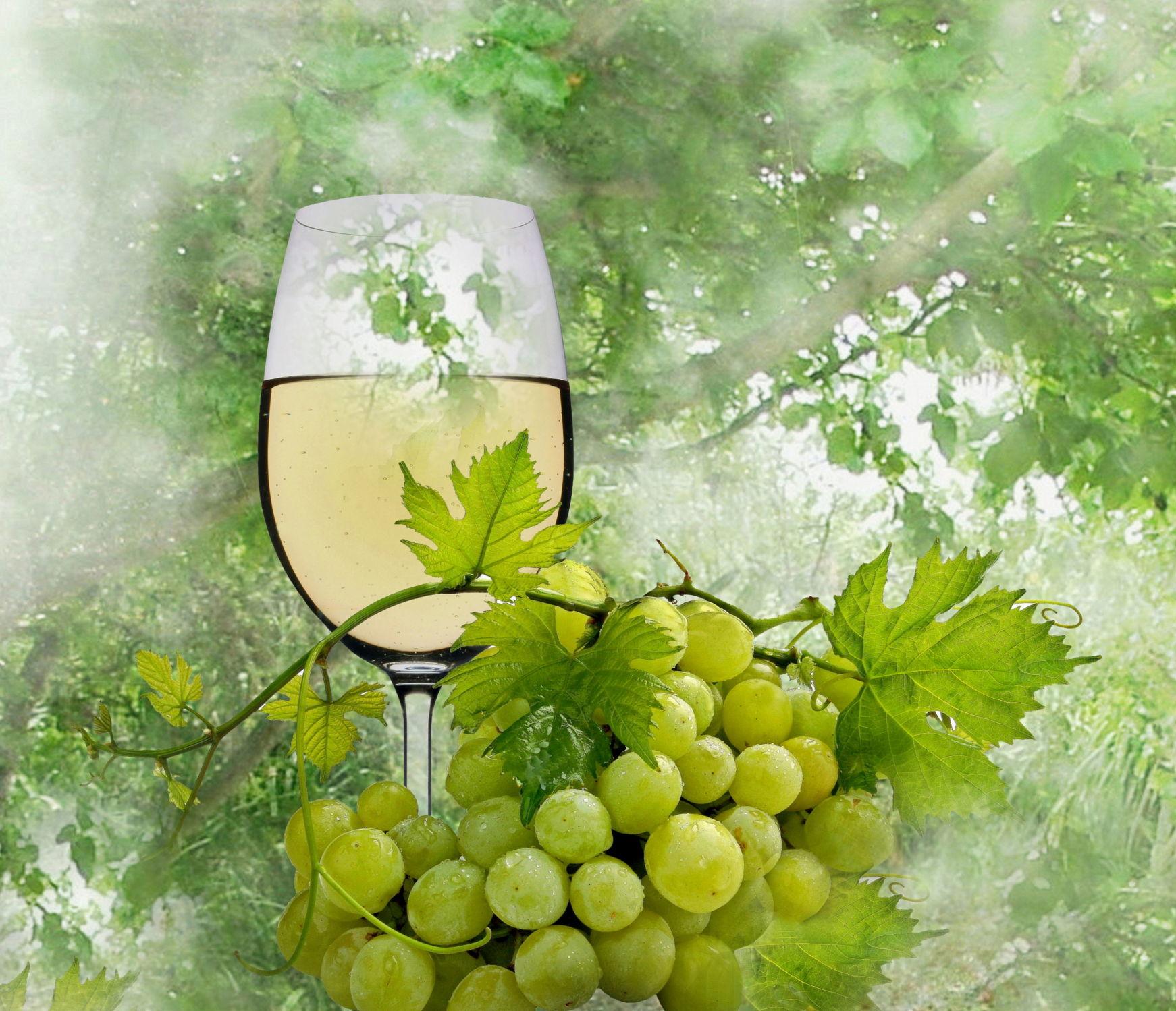 Bild mit Bäume, Trinken, Baum, Nahrung, Weintrauben, garten, Wein, Ernährung, Getränk, weinglas, Weisswein, weinblätter, weinlaub