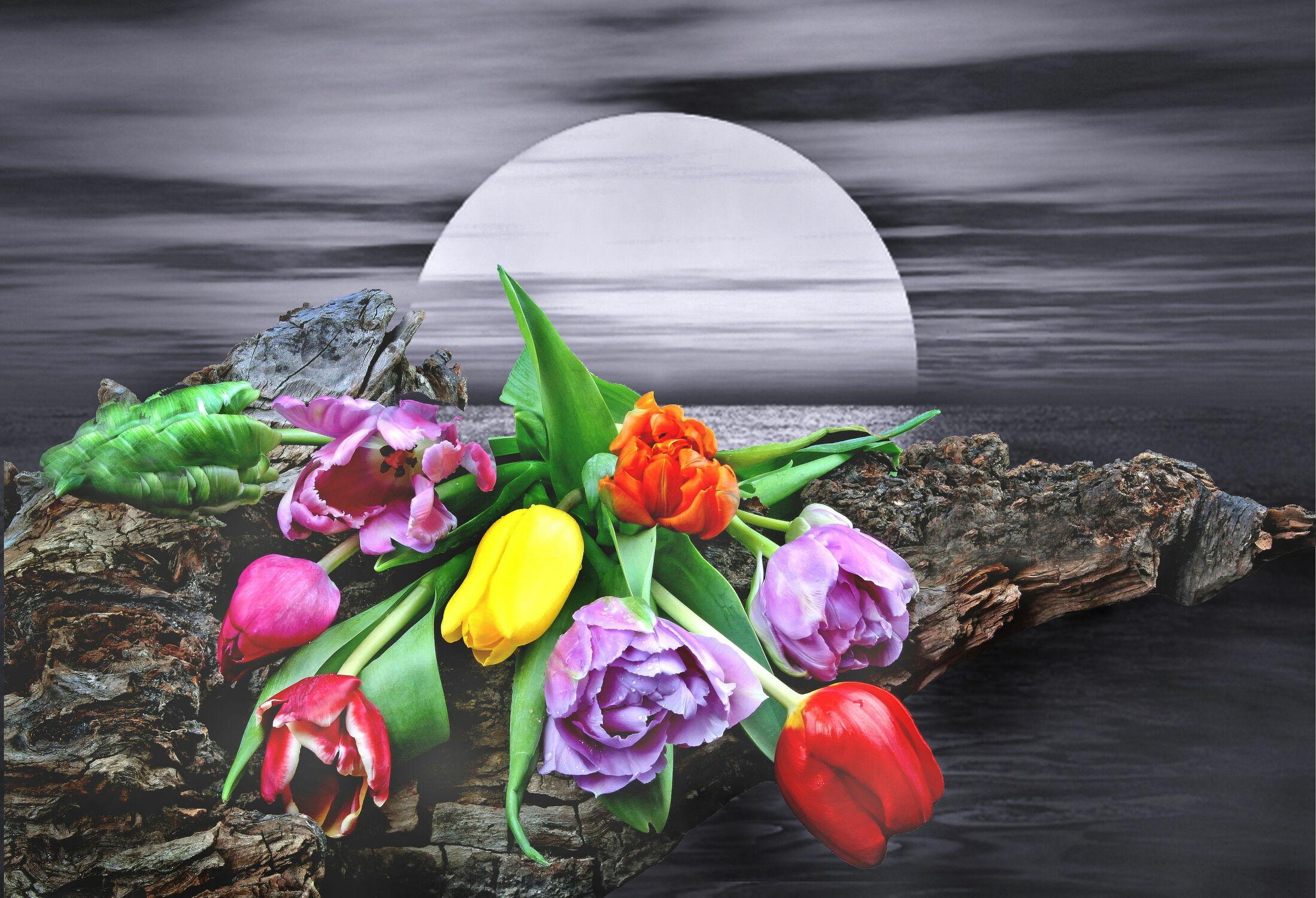 Bild mit Wasser, Wasser, Berge, Blumen, Sonnenuntergang, Sonne, Landschaft, Blume, Tulpe, Tulpen, Wassertropfen, Blüten, Fantasie, blüte, romantisch