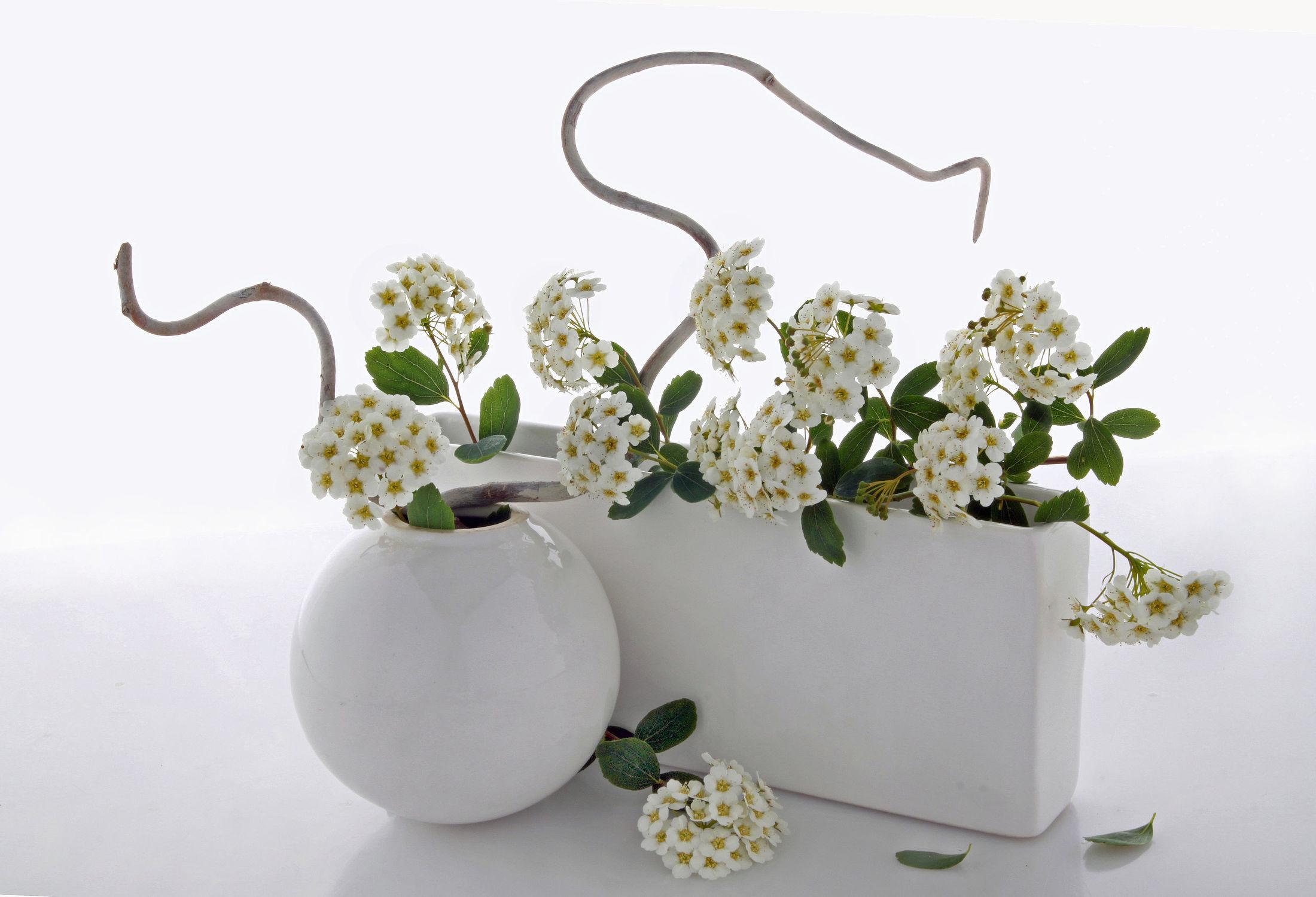 Bild mit Pflanzen, Blumen, Blume, Pflanze, Floral, Flora, Blüten, Florales, Wellness, blüte, Zweige, Zweig, Kugel, zen, vase