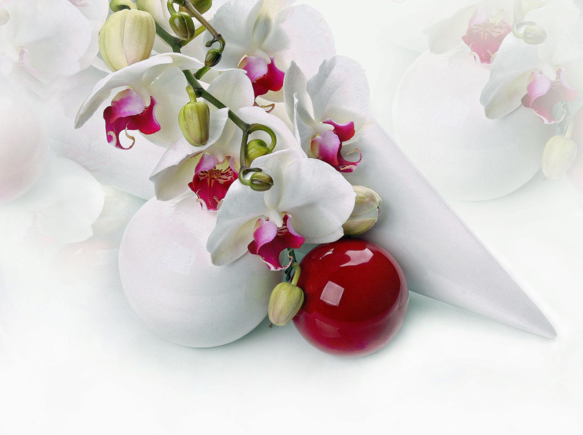 Bild mit Blumen, Orchideen, Blume, Orchidee, Floral, Blüten, Florales, blüte, romantisch, Kugel, soft