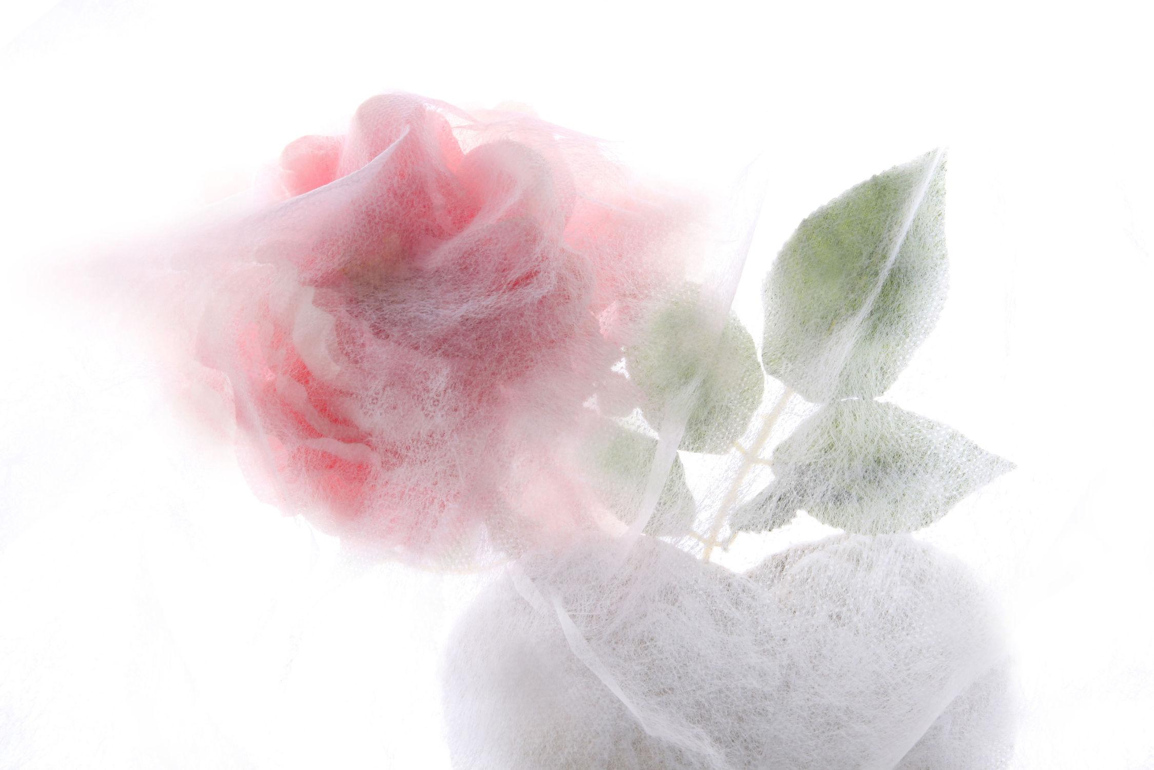 Bild mit Blumen, Rosen, Blume, Rose, Floral, Blüten, Florales, blüte, romantisch, Herz, Liebe