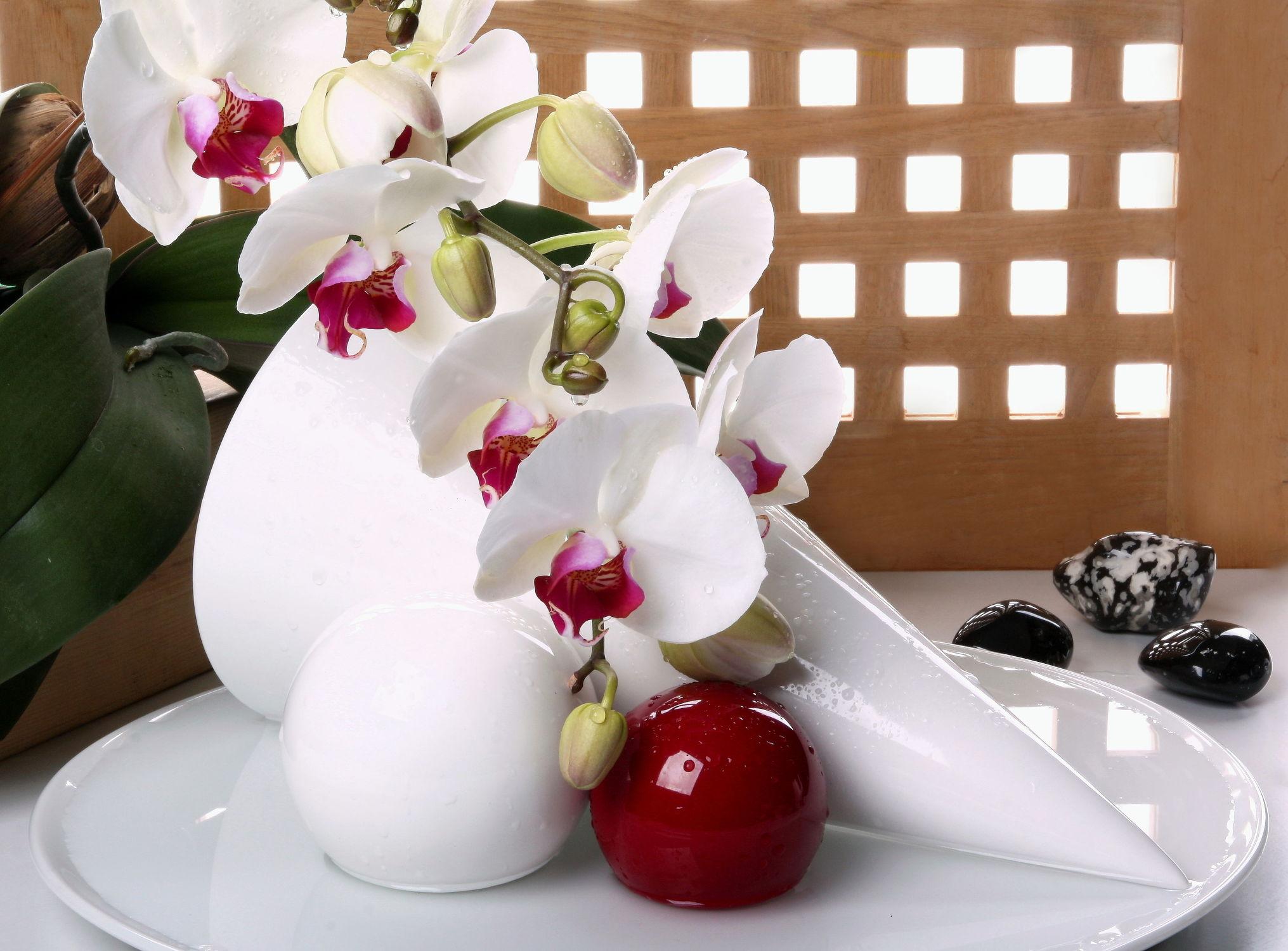 Bild mit Wasser, Blumen, Stein, Orchideen, Orchideen, Steine, Blume, Wassertropfen, Floral, Blüten, Florales, blüte, Kugel, Kugeln