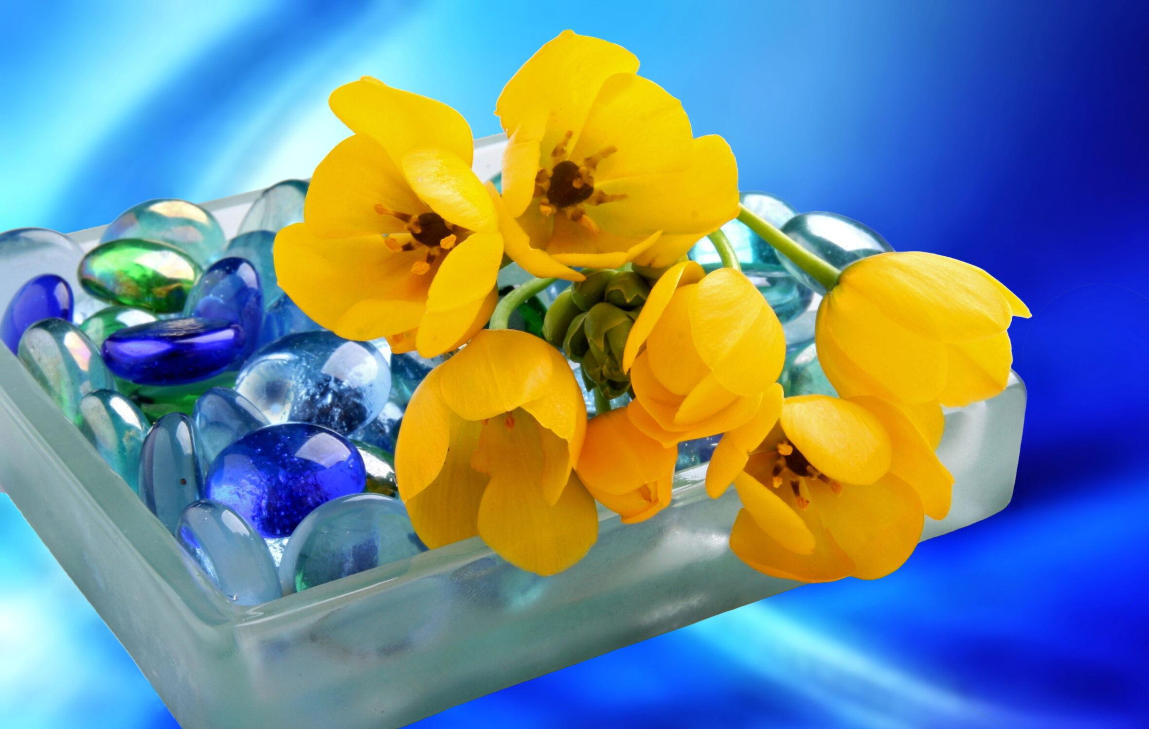 Bild mit Pflanzen, Blumen, Stein, Steine, Blume, Pflanze, Stilleben, Blüten, Wellness, blüte, beauty