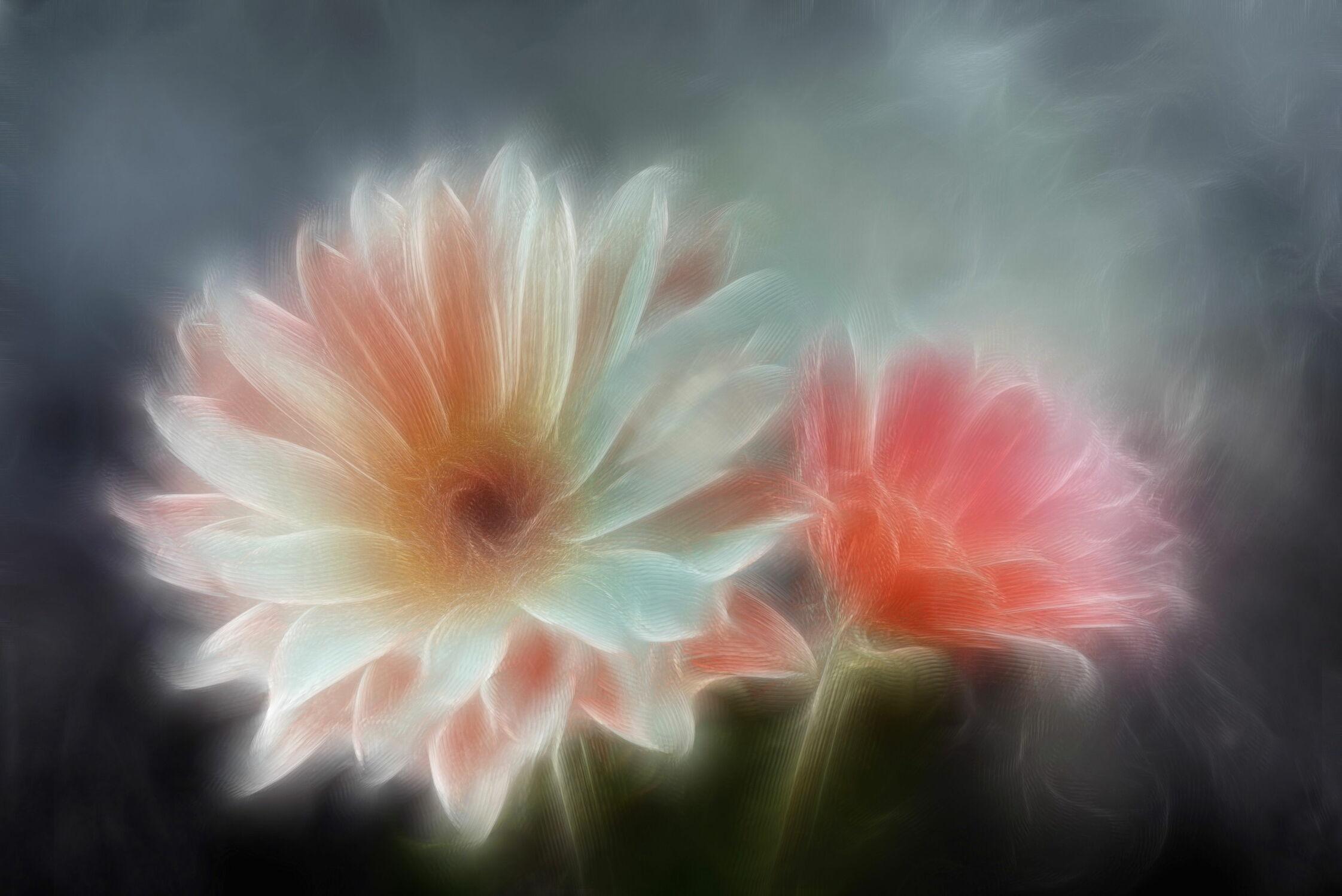 Bild mit Blumen, Blume, Pflanze, Pflanze, Margeriten, Margerite, Floral, Stilleben, Blüten, Florales, blüte, weich, soft