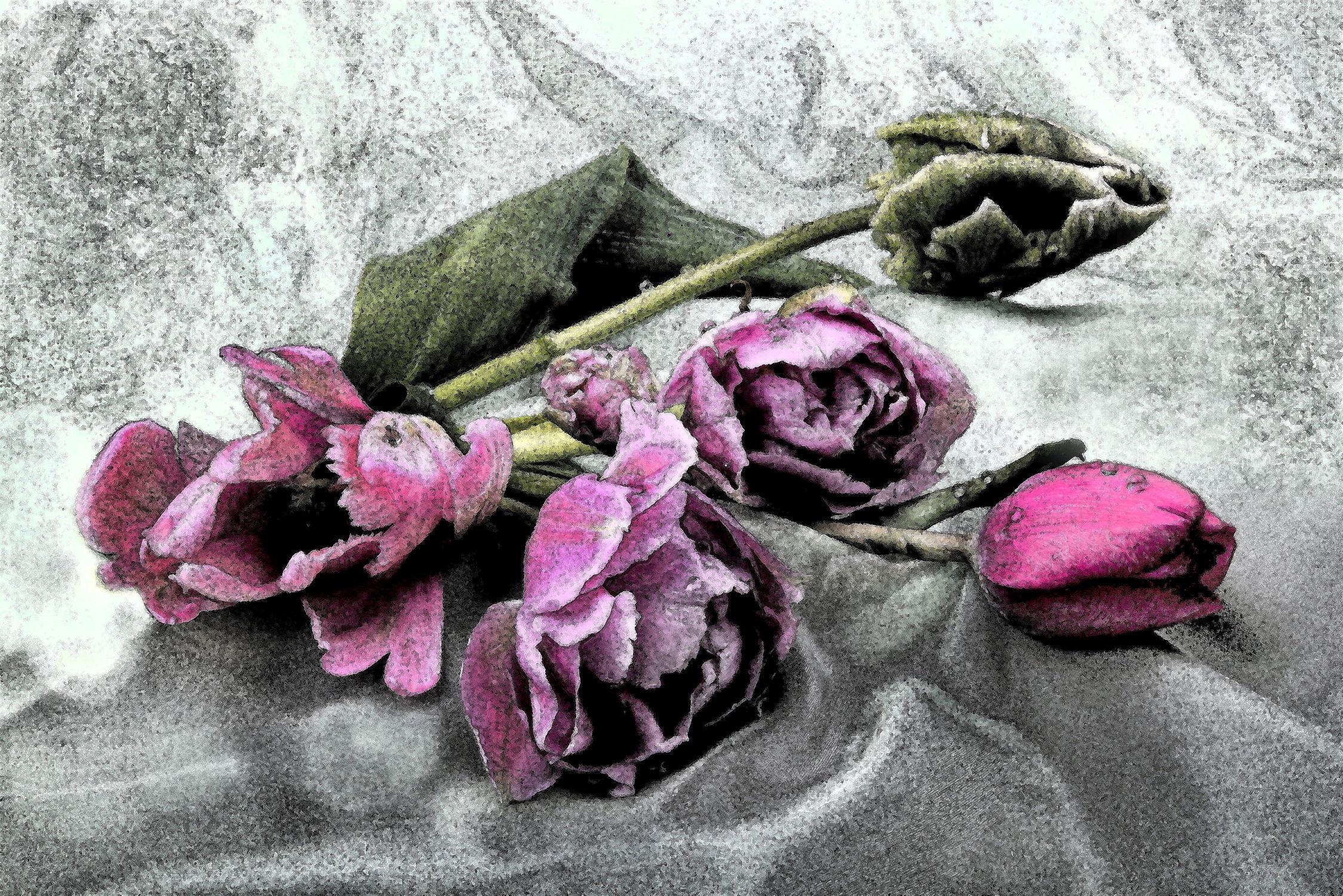 Bild mit Pflanzen, Blumen, Blume, Pflanze, Tulpe, Tulpen, Floral, Stilleben, Blüten, Florales, blüte, fresco