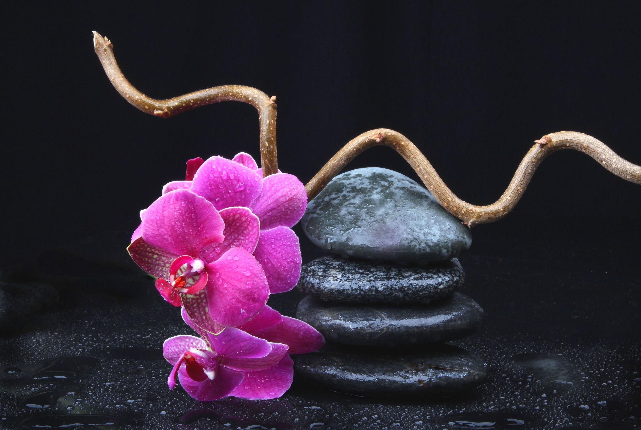 Bild mit Wasser, Blumen, Stein, Orchideen, Steine, Blume, Orchidee, Pflanze, Wassertropfen, Entspannung, Floral, Blüten, Florales, Wellness, blüte, Zweige, Zweig, zen