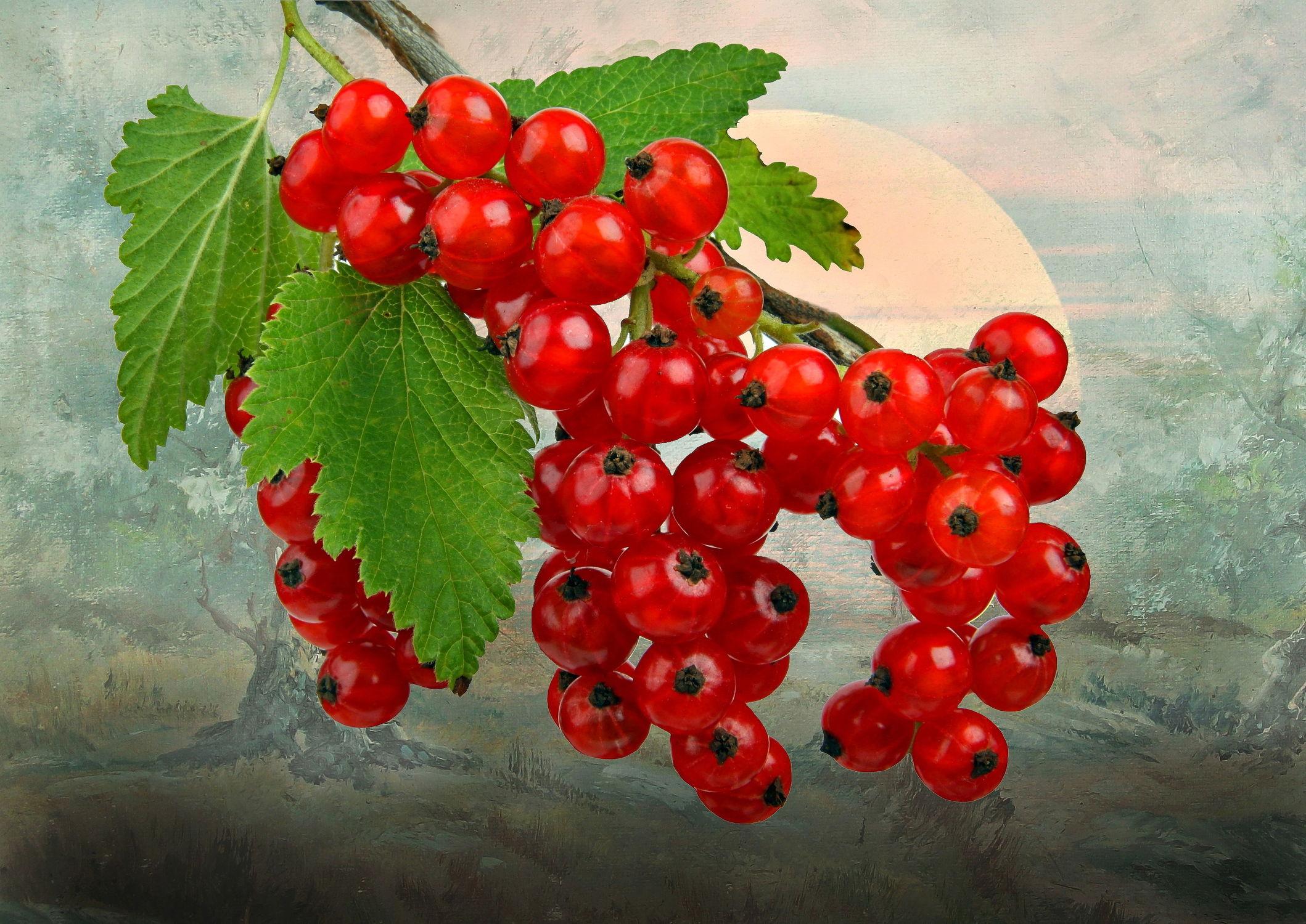 Bild mit Früchte, Essen, Beeren, Frucht, Obst, Küchenbild, Stilleben, Küchenbilder, Küche, Johannisbeeren, Johannisbeere