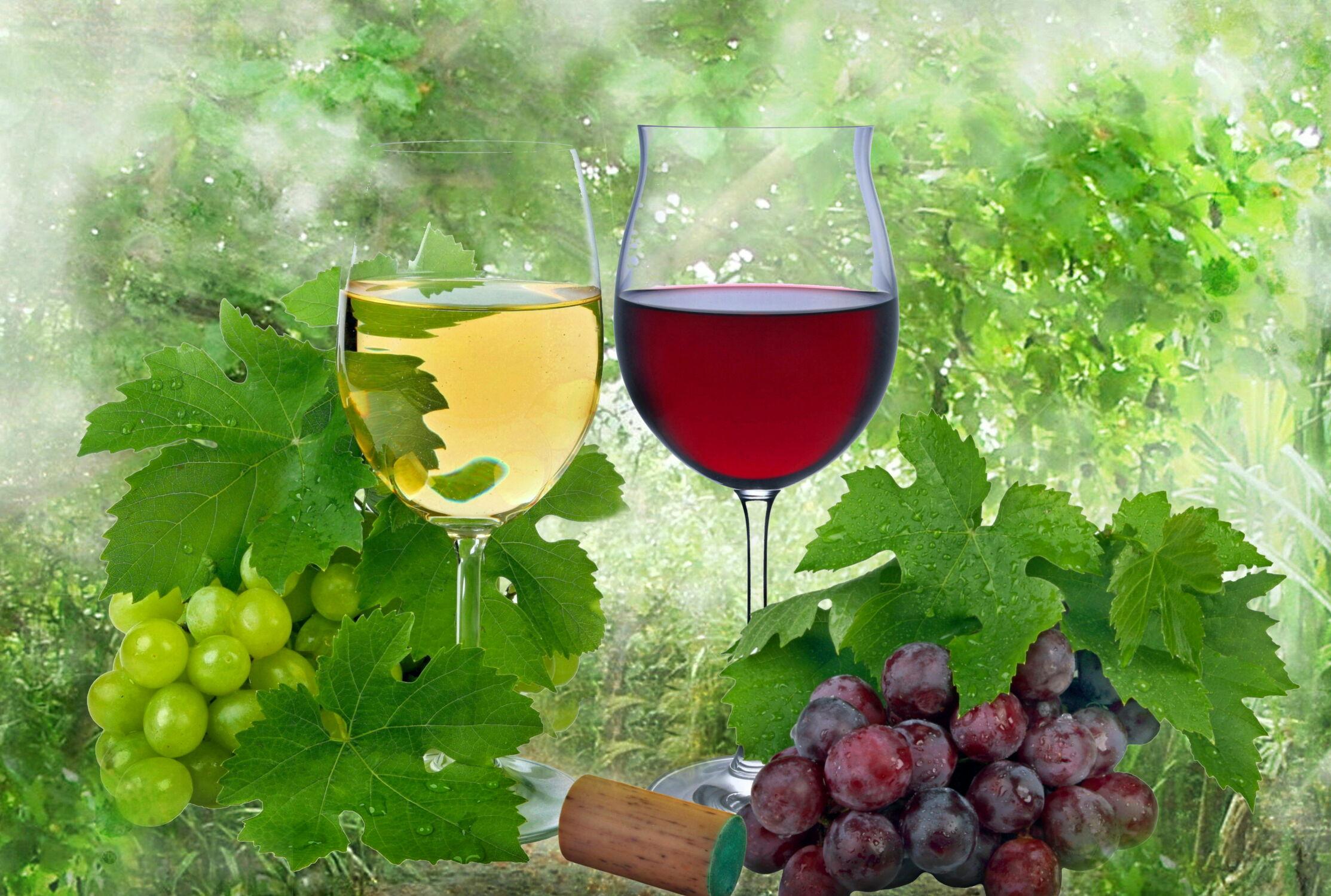 Bild mit Früchte, Frucht, Obst, Weintrauben, Food, Stilleben, Wein, rotwein, weinglas, Weisswein, weißwein, weinblätter, weinlaub, weingläser