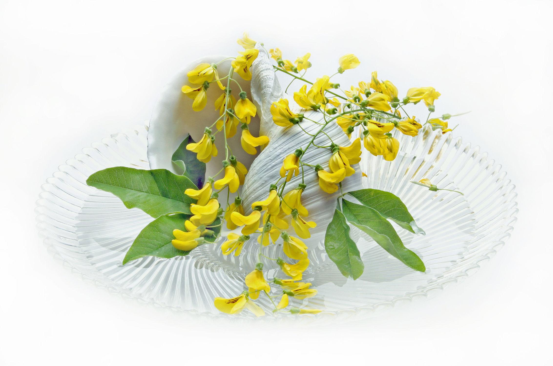 Bild mit Pflanzen, Blumen, Blume, Pflanze, Floral, Blüten, Florales, blüte, weich