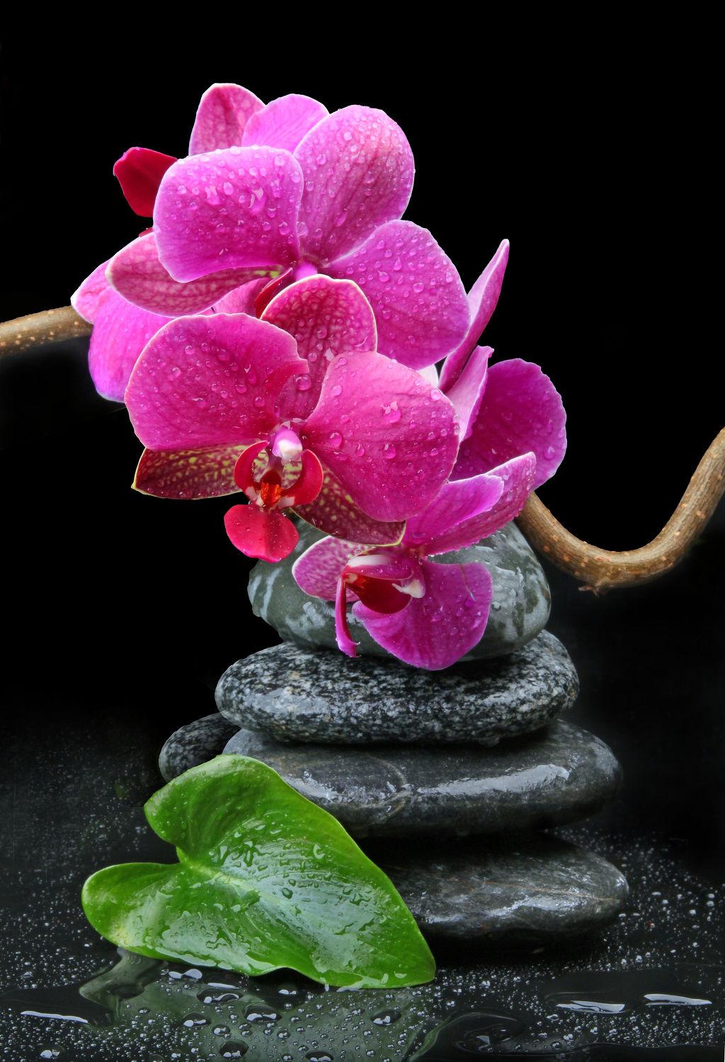 Bild mit Pflanzen, Blumen, Stein, Orchideen, Steine, Blume, Orchidee, Pflanze, Wassertropfen, Floral, Blüten, Florales, blüte