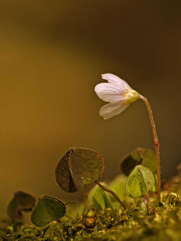 Bild mit Natur, Pflanzen, Wälder, Blumen, Wald, Blume, Pflanze, Blüten, blüte