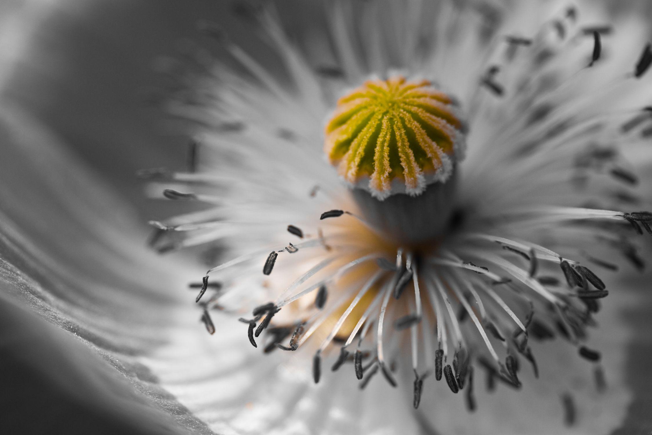 Bild mit Blüten