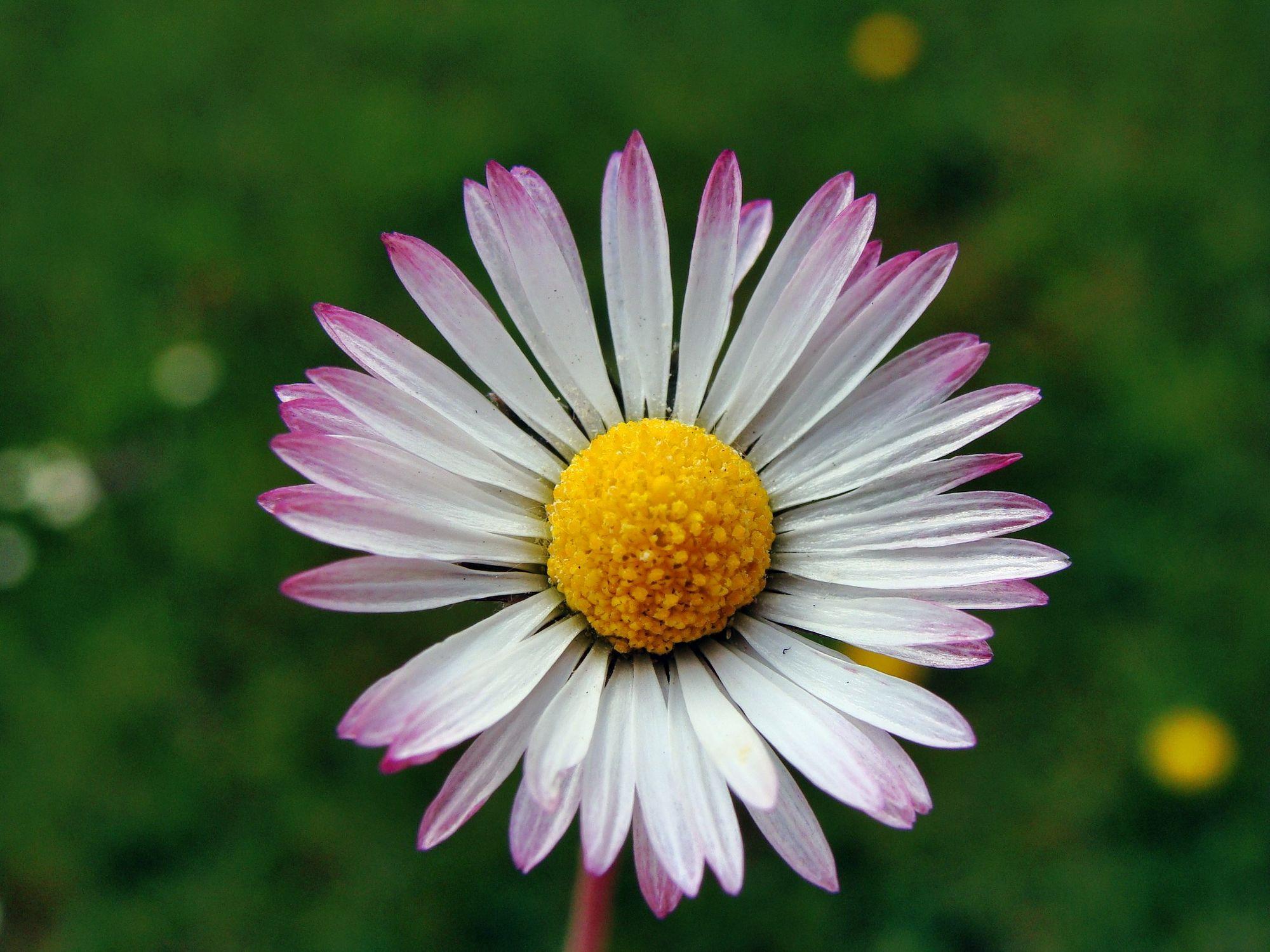 Bild mit Blumen