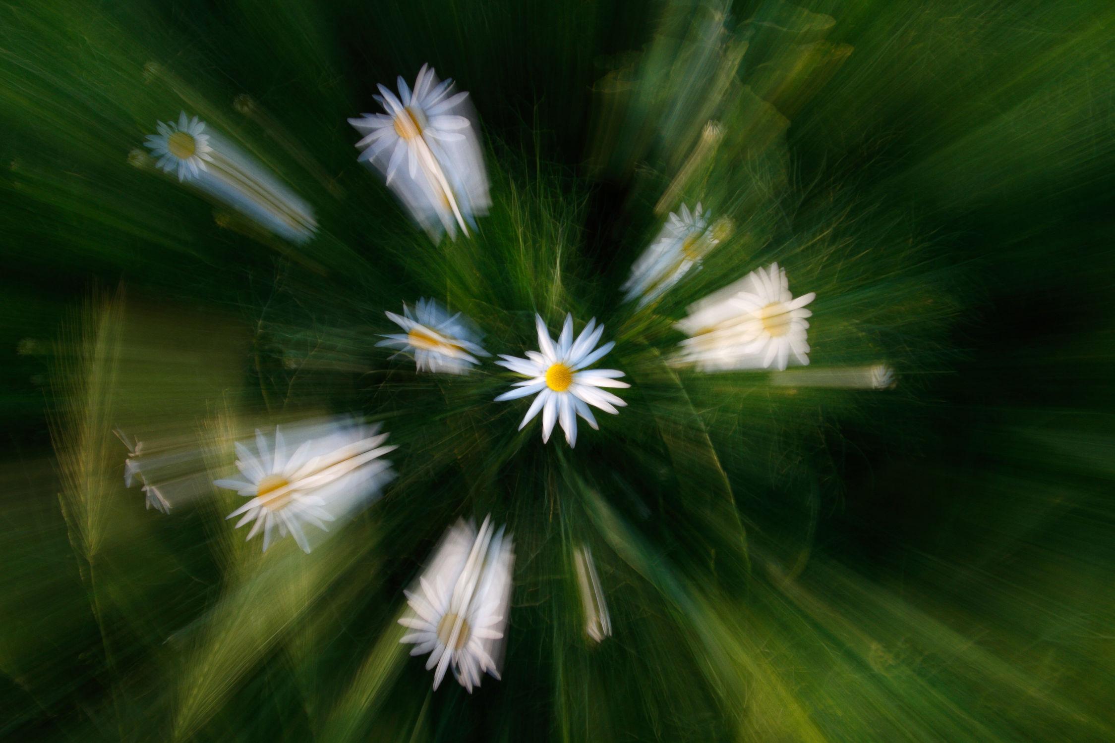 Bild mit Blumen & Pflanzen