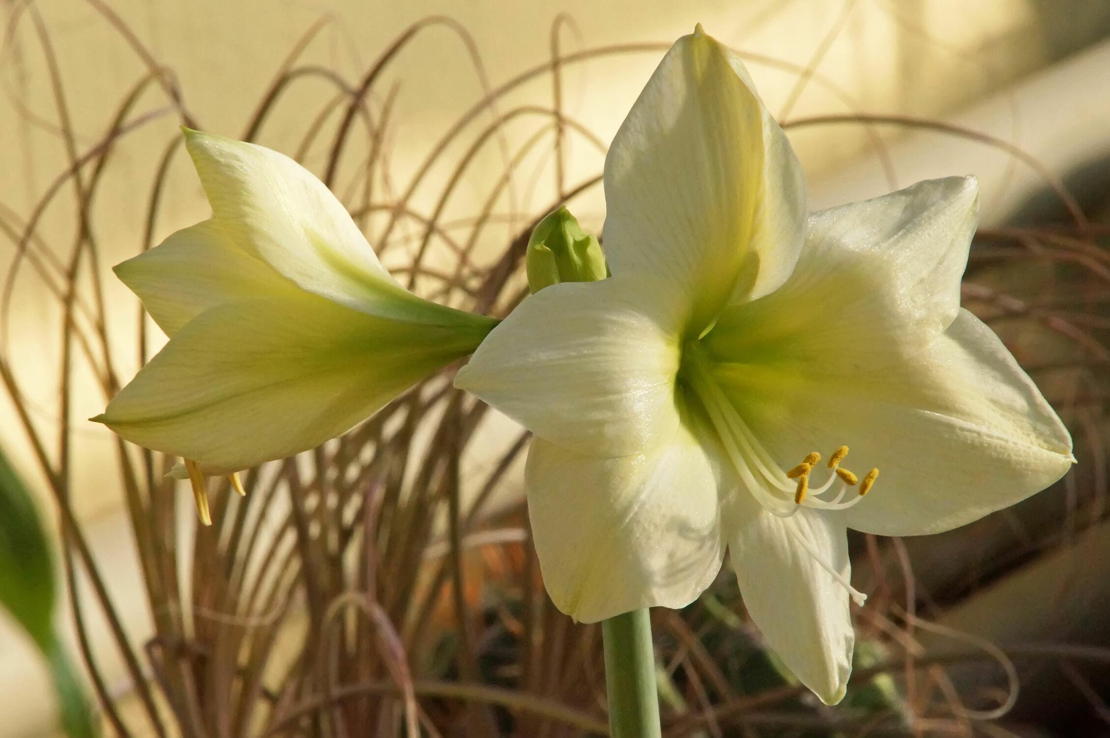 Bild mit zimmerpflanzen