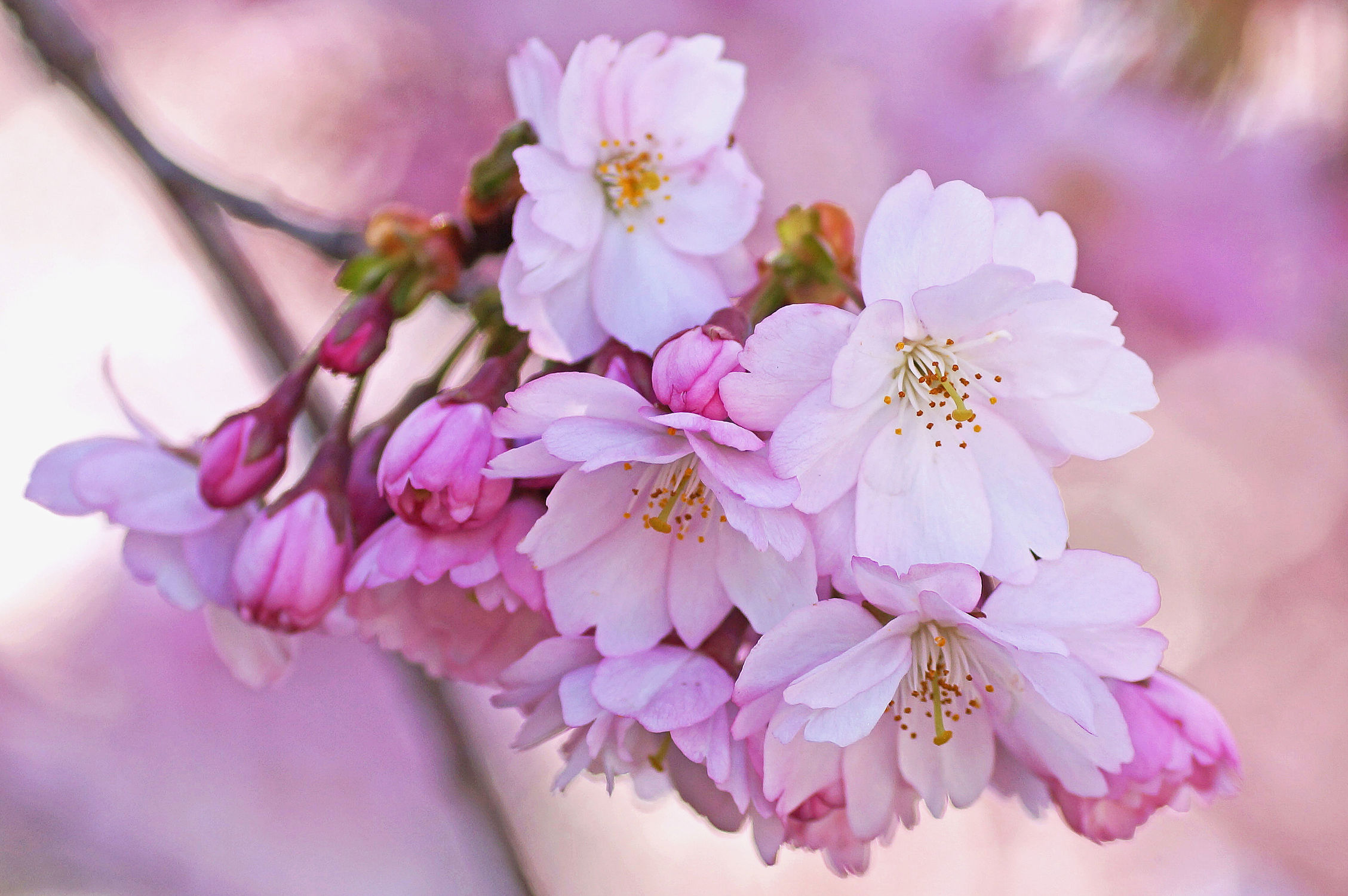Bild mit obstblüten