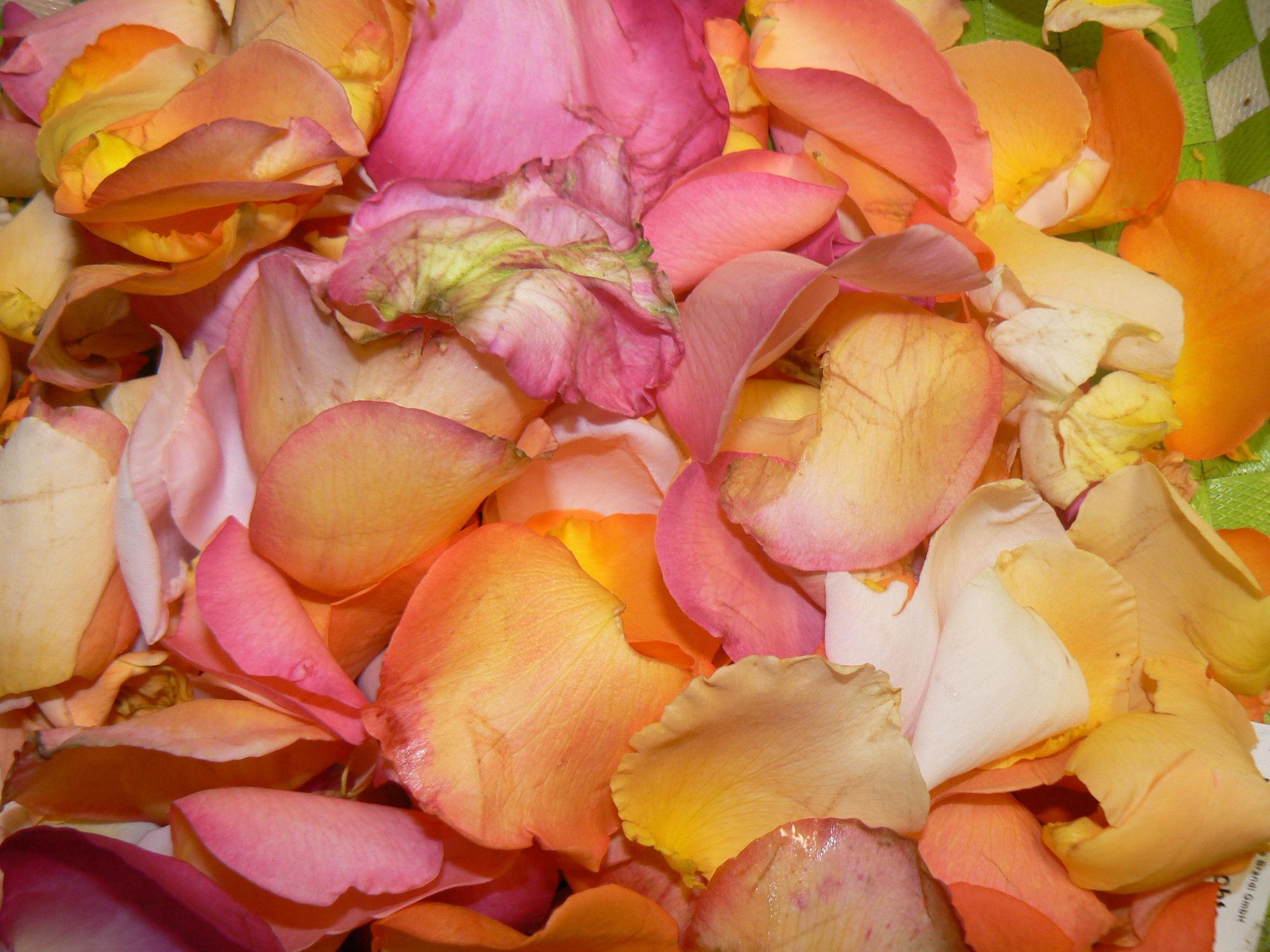 Bild mit Pflanzen, Rosen, Blätter, Pflanze, Rose, romantik, Blüten, blüte, Liebe