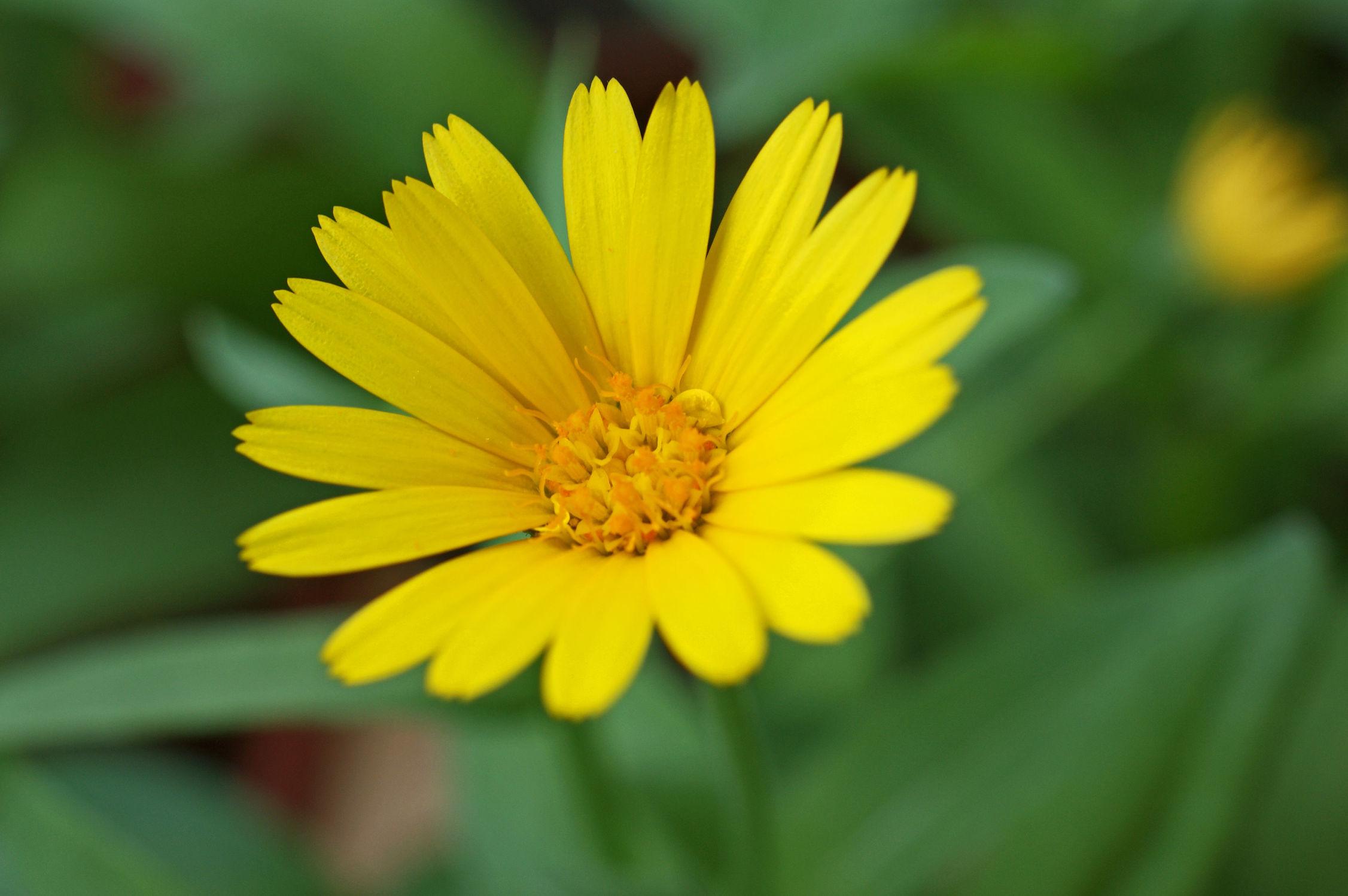 Bild mit Blumen, Blume, ringelblume, Blüten, blüte