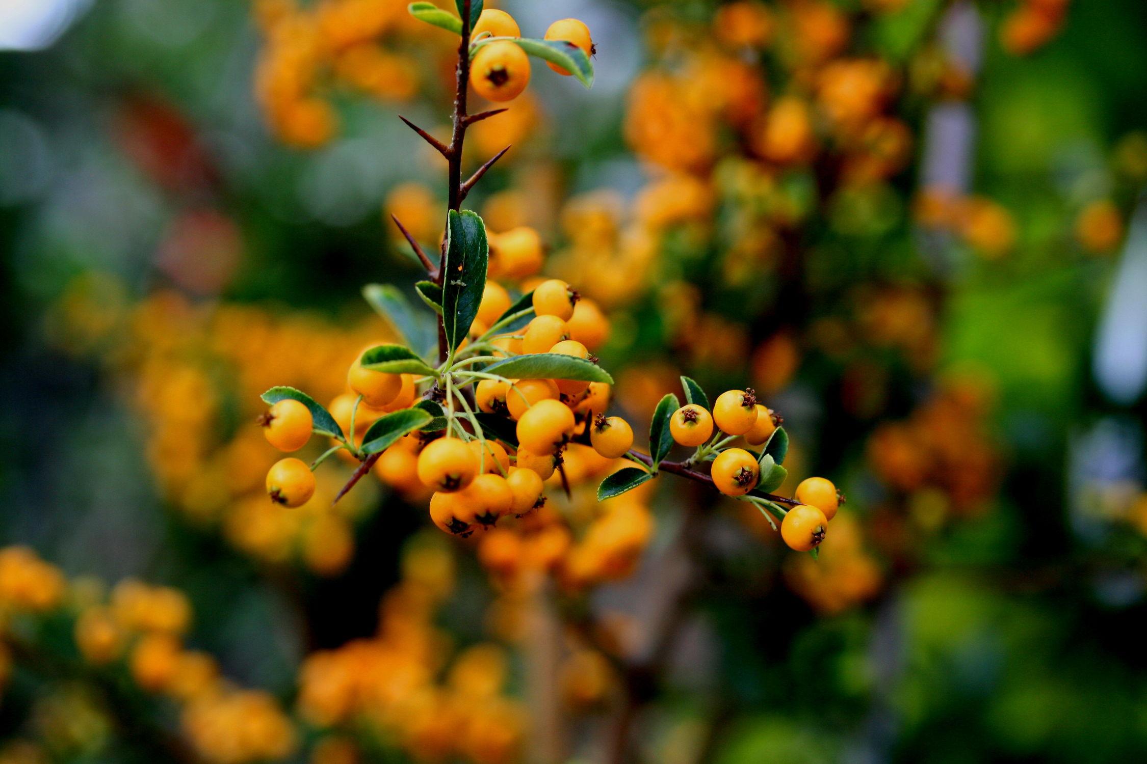 Bild mit Herbst