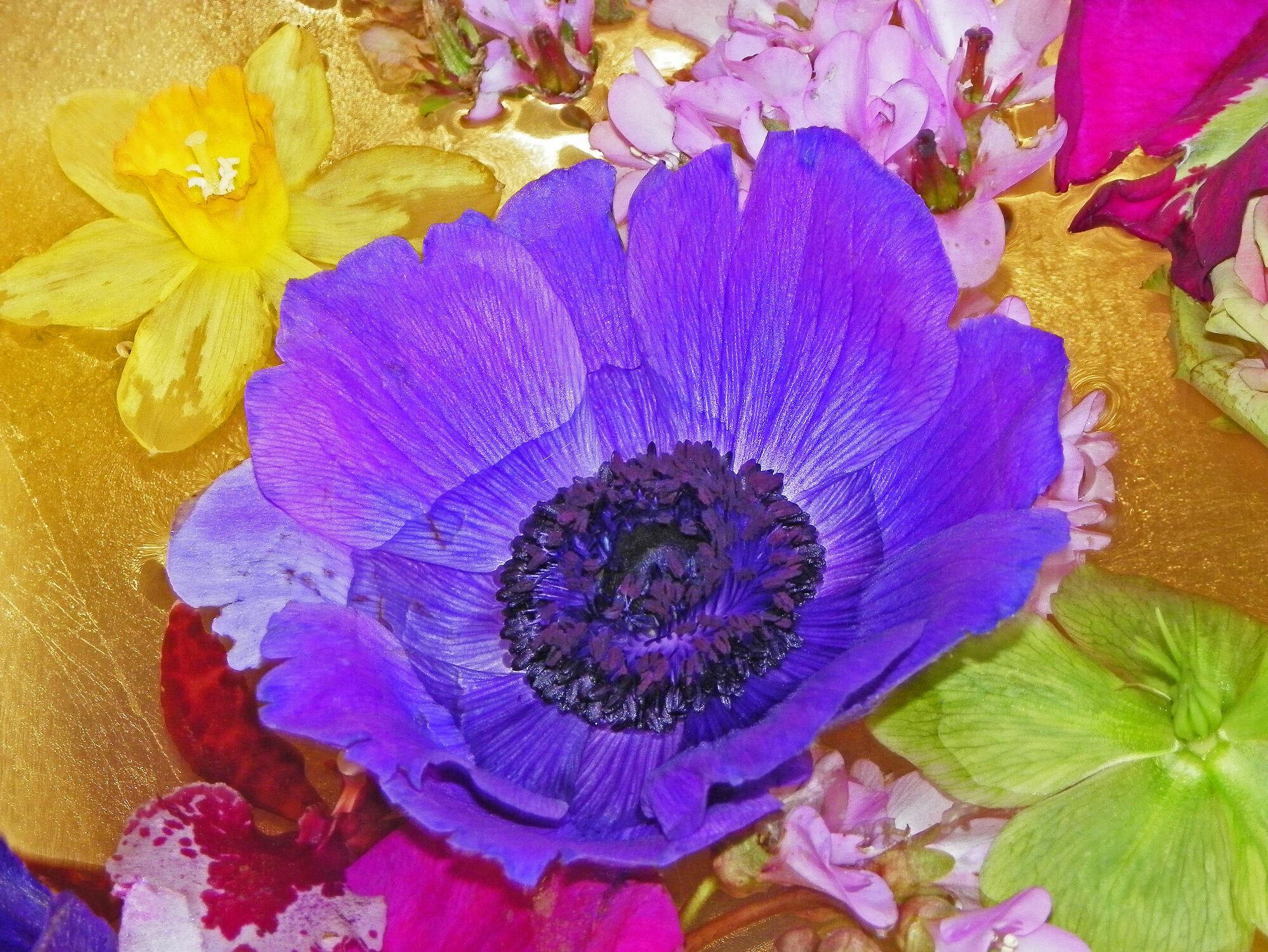 Bild mit Pflanzen, Blumen, Blume, Pflanze, frühlingsblumen, Blüten, blüte