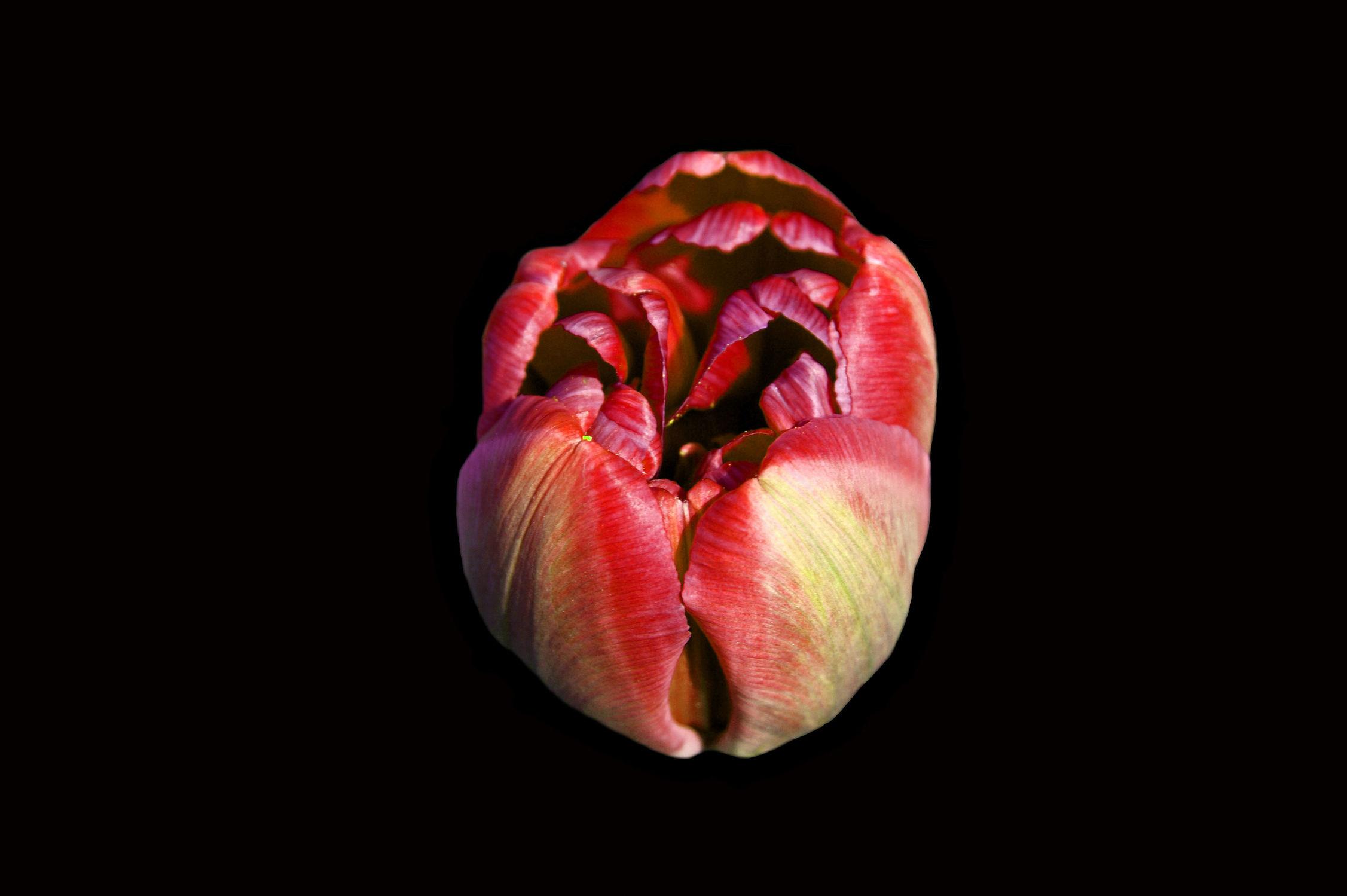 Bild mit freigestellte blumen